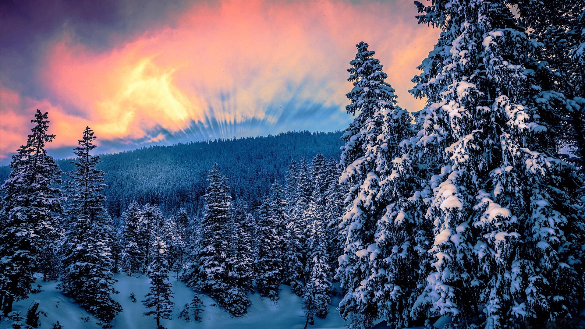 пишет картинки зеленые ели зима снег закат таких