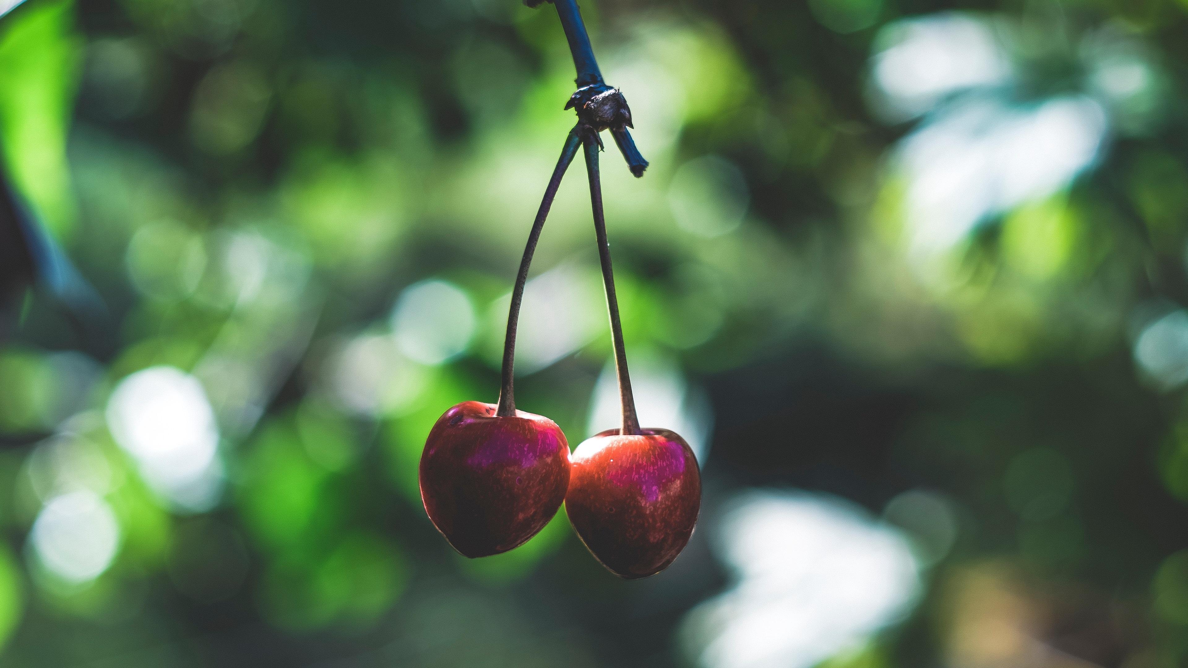 nature fruit cherries depth of field closeup 1661971