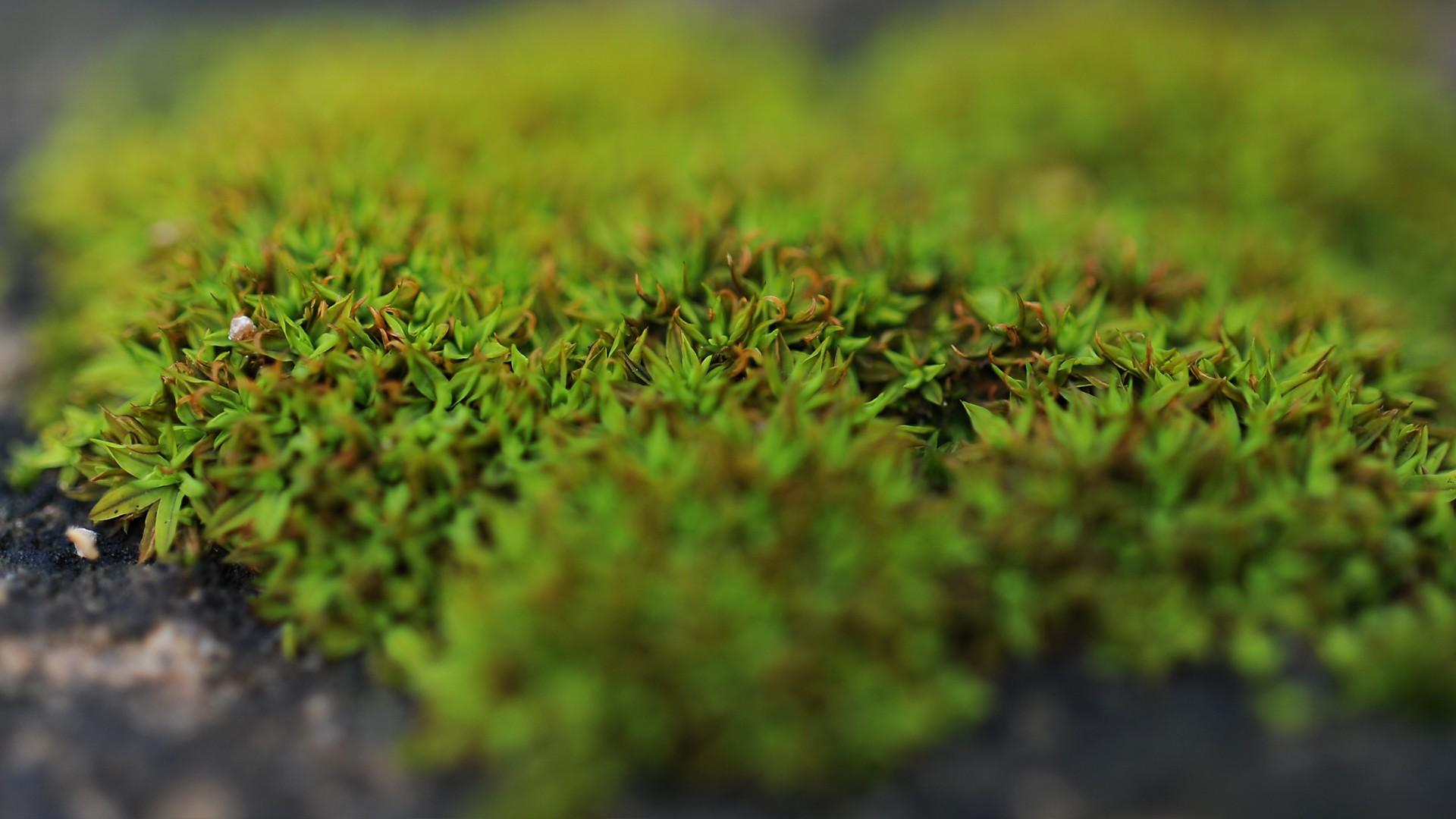 Fondos de pantalla naturaleza c sped musgo verde for Tierra suelo wallpaper