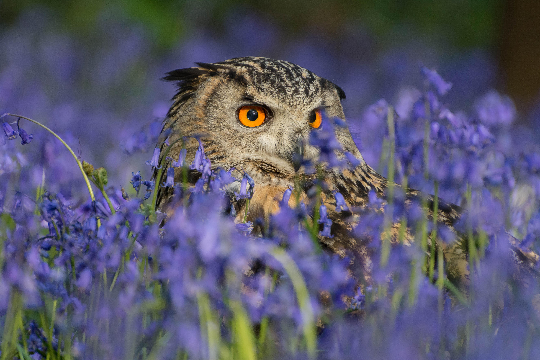 88  Gambar Burung Flora Fauna  Terbaik