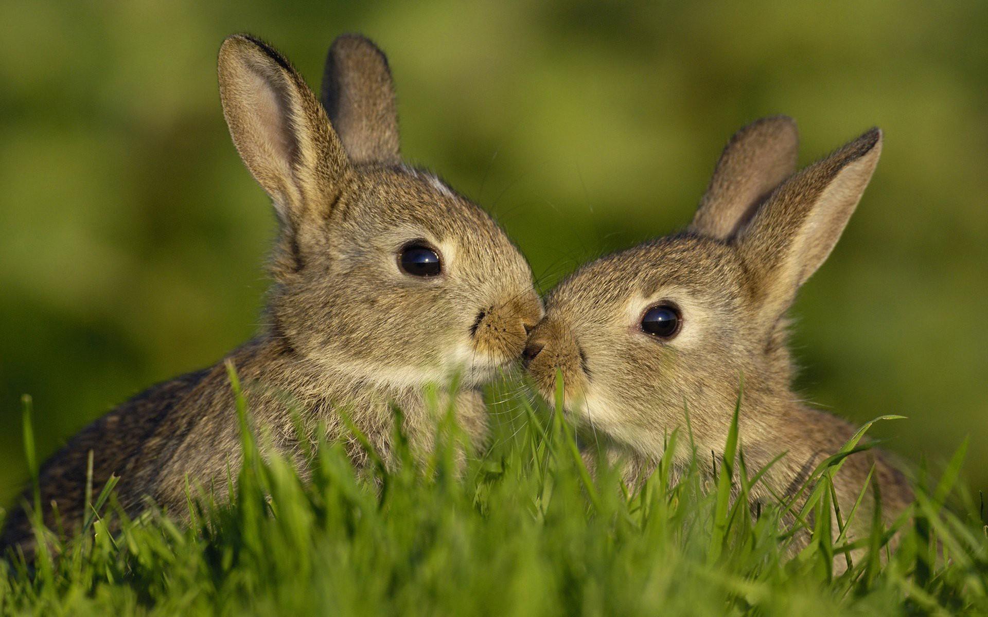 с красивые картинки зайцем
