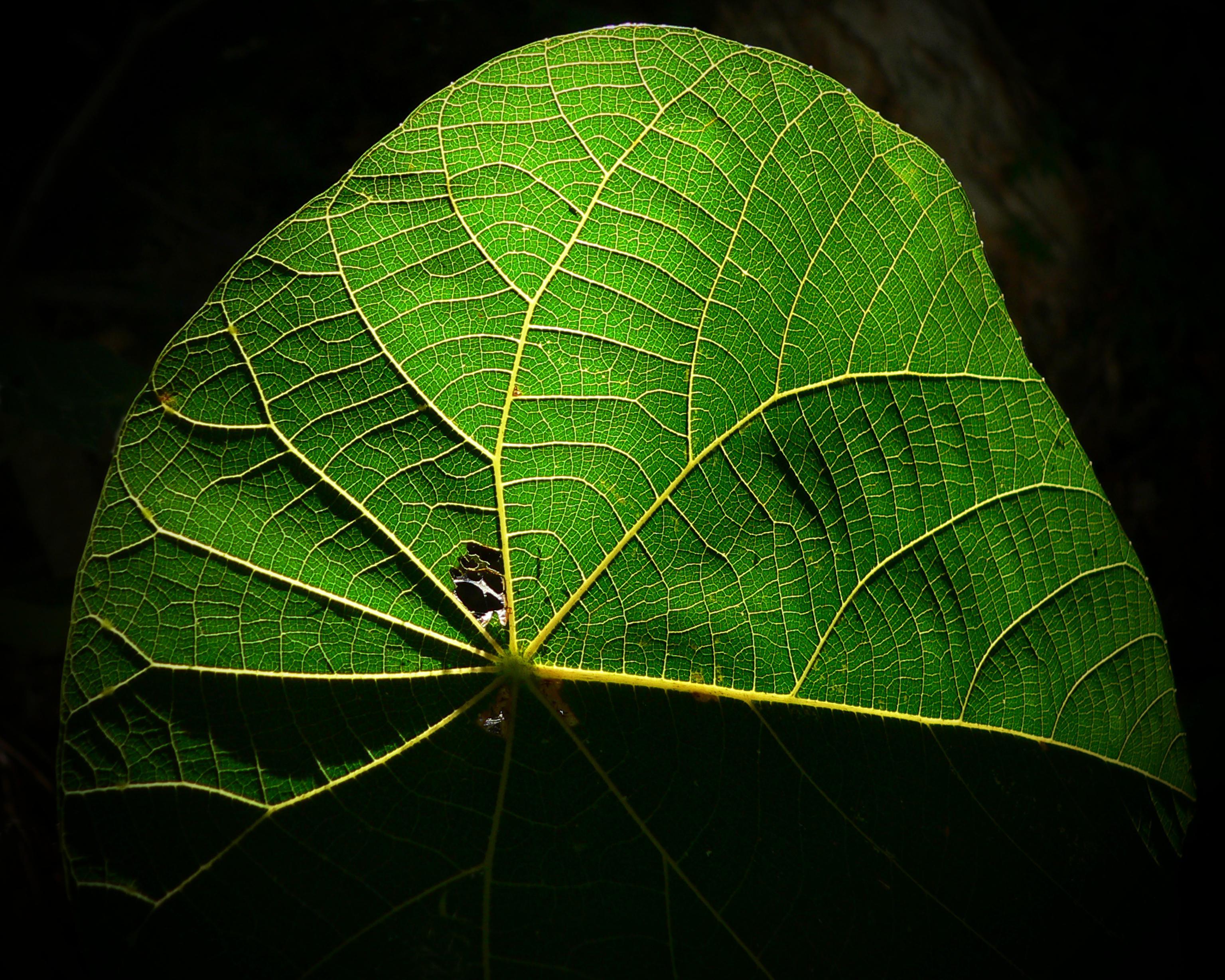 макро фото сечение листа дерева светское государство