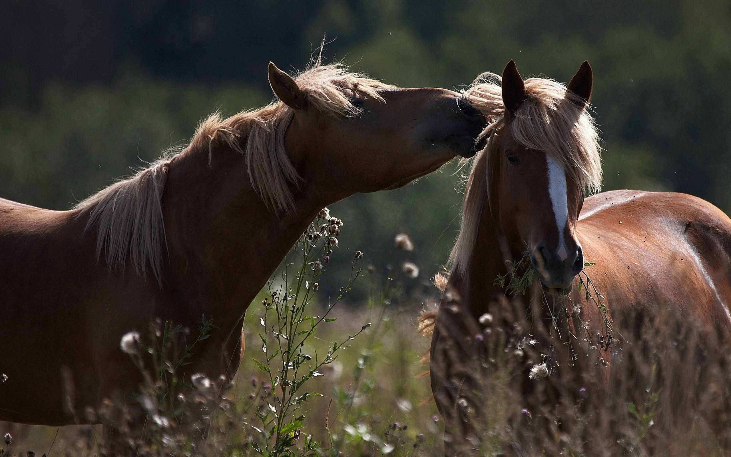 фото лошадьми большом с формате в