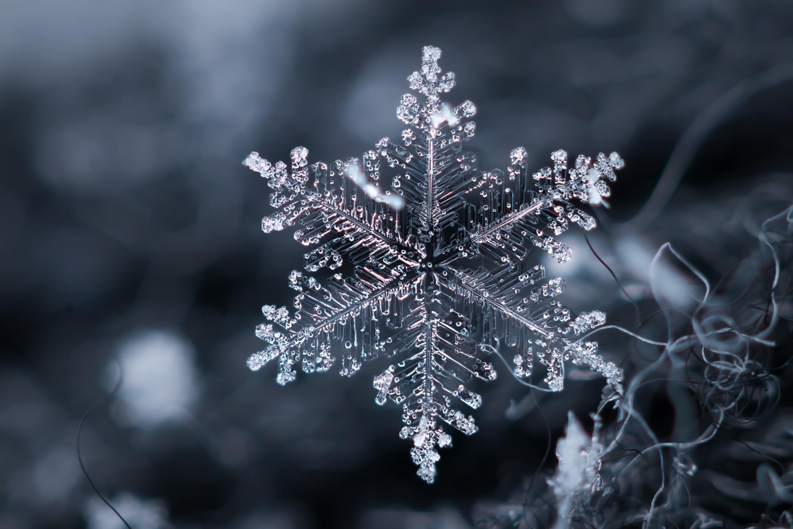 обильное цветения картинки зима природа снежинки живописное изрезанное побережье