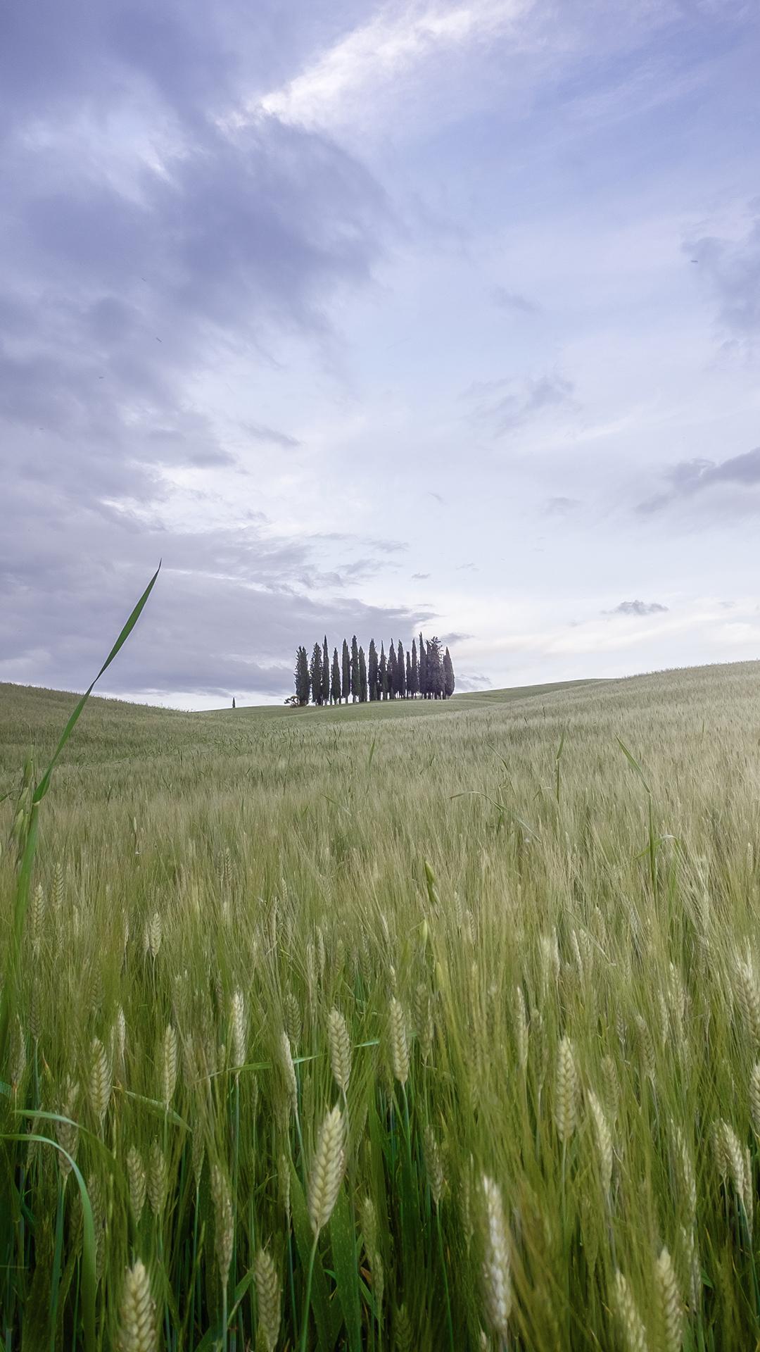 Wallpaper Nature Landscape Portrait Display Trees