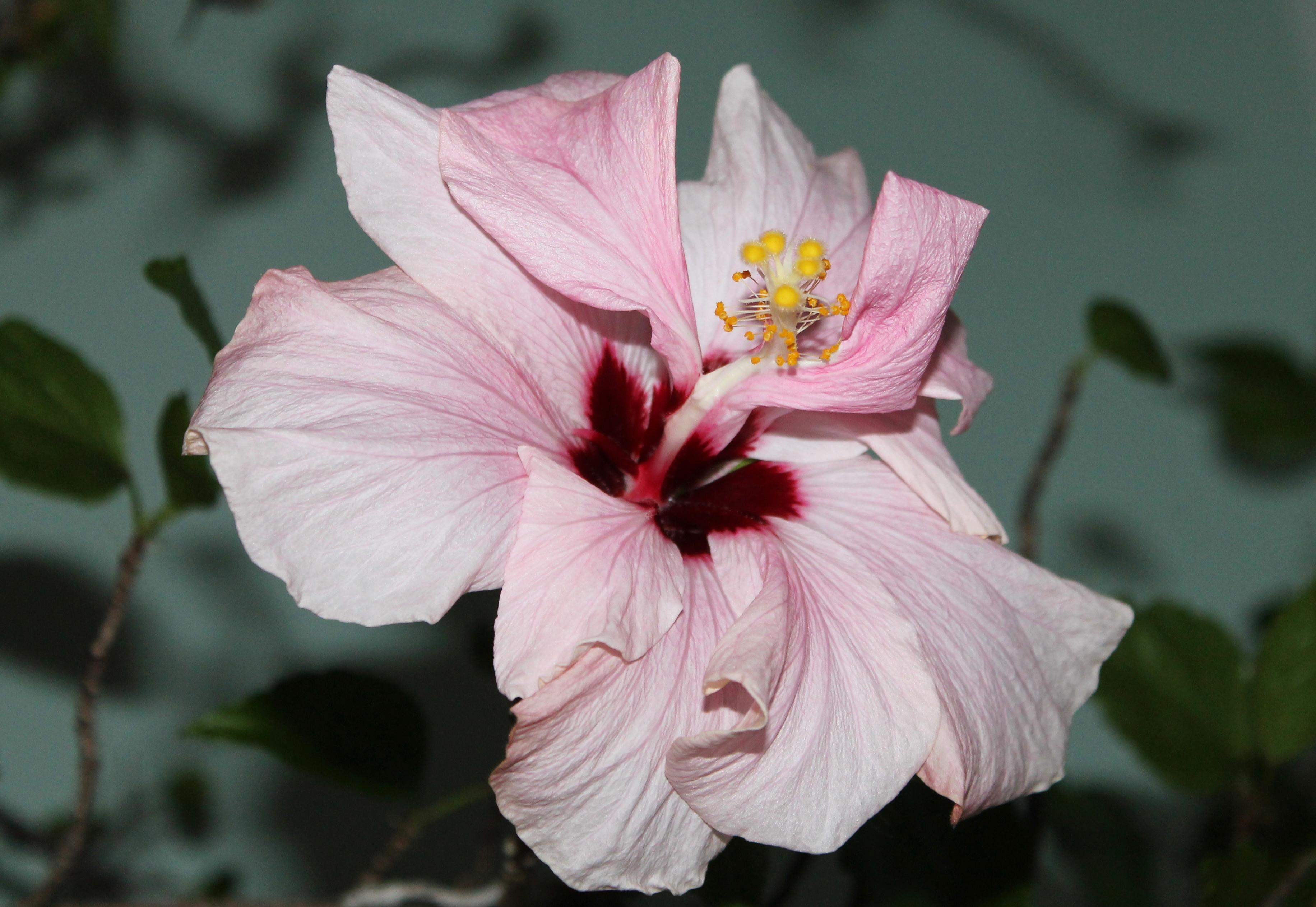 Wallpaper Nature Macro Petals Blossom Bokeh Pink Spring