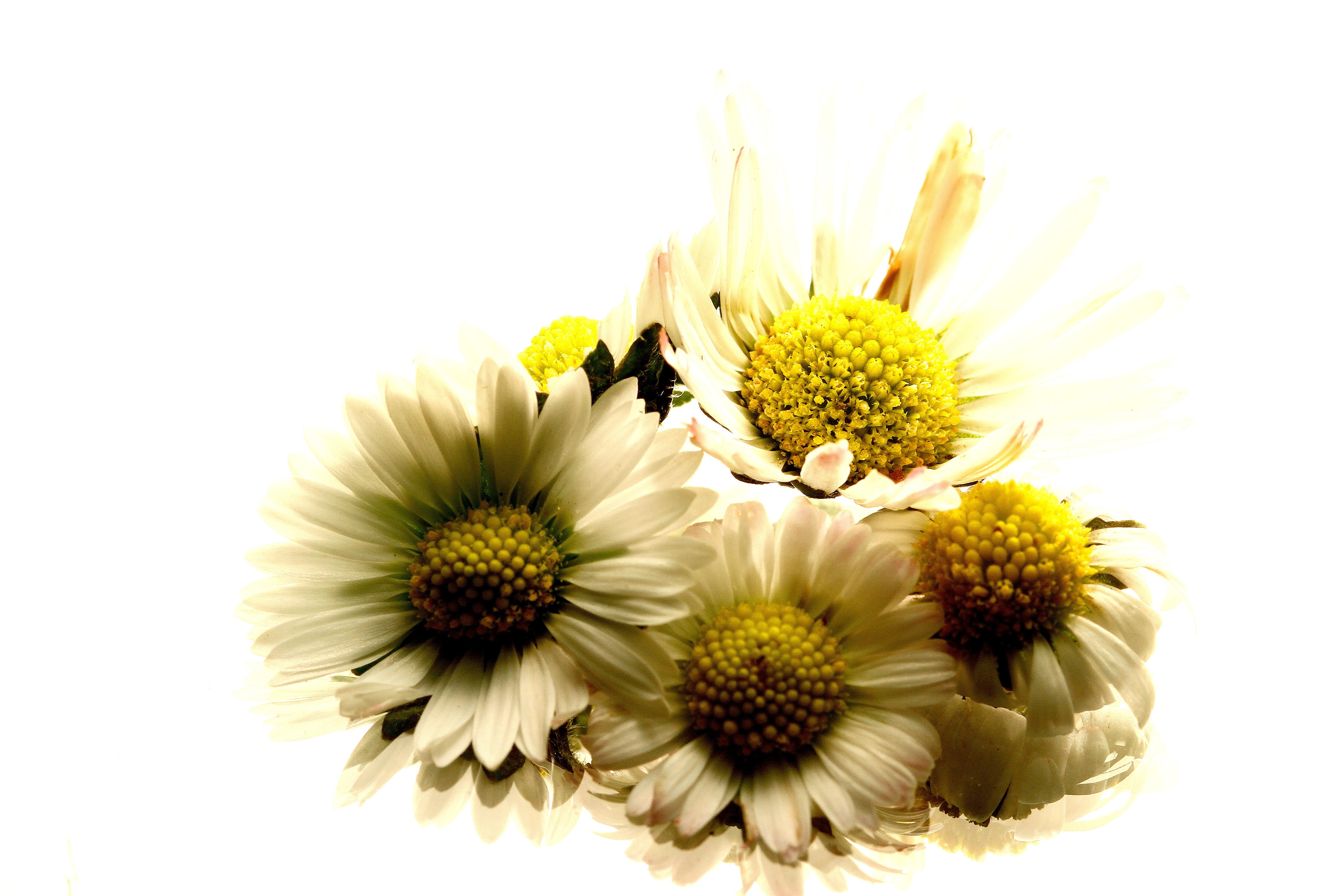 デスクトップ壁紙 自然 マクロ 黄 花粉 光 ひまわり ミロー