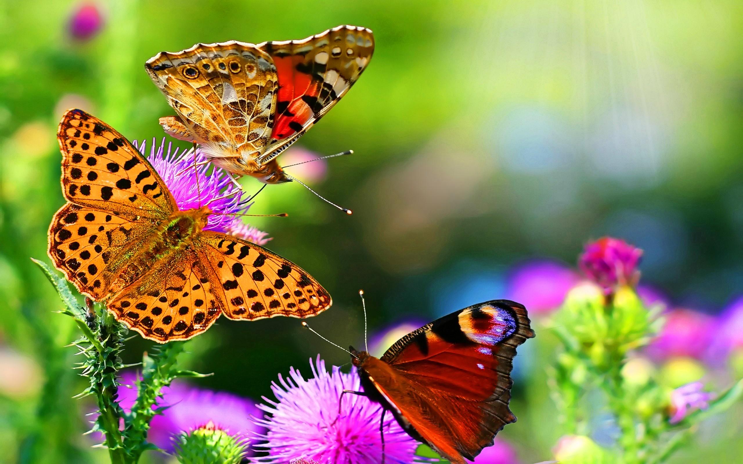 красивые картинки с природой и цветами запись при