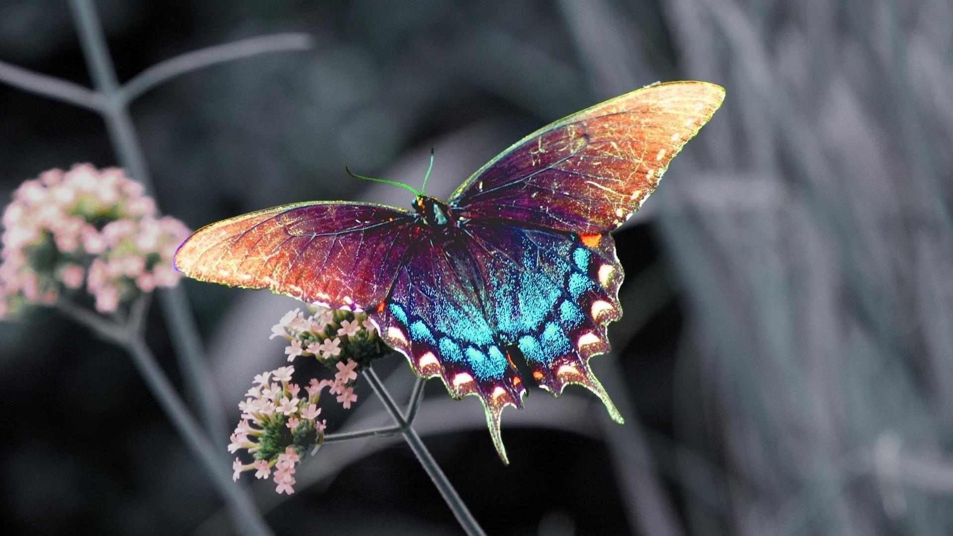Необычные бабочки