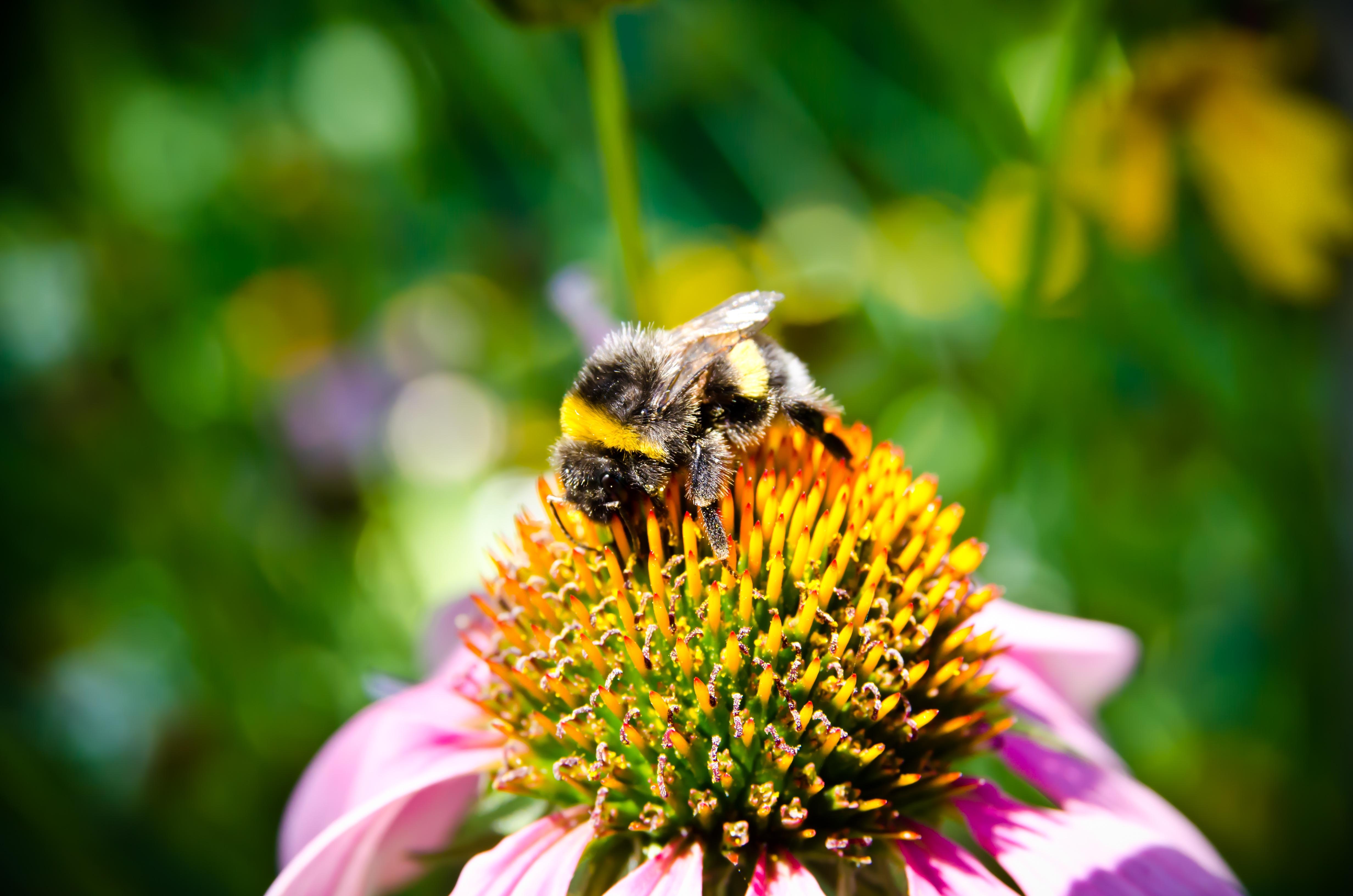 картинка как пчела опыляет цветок что после работы
