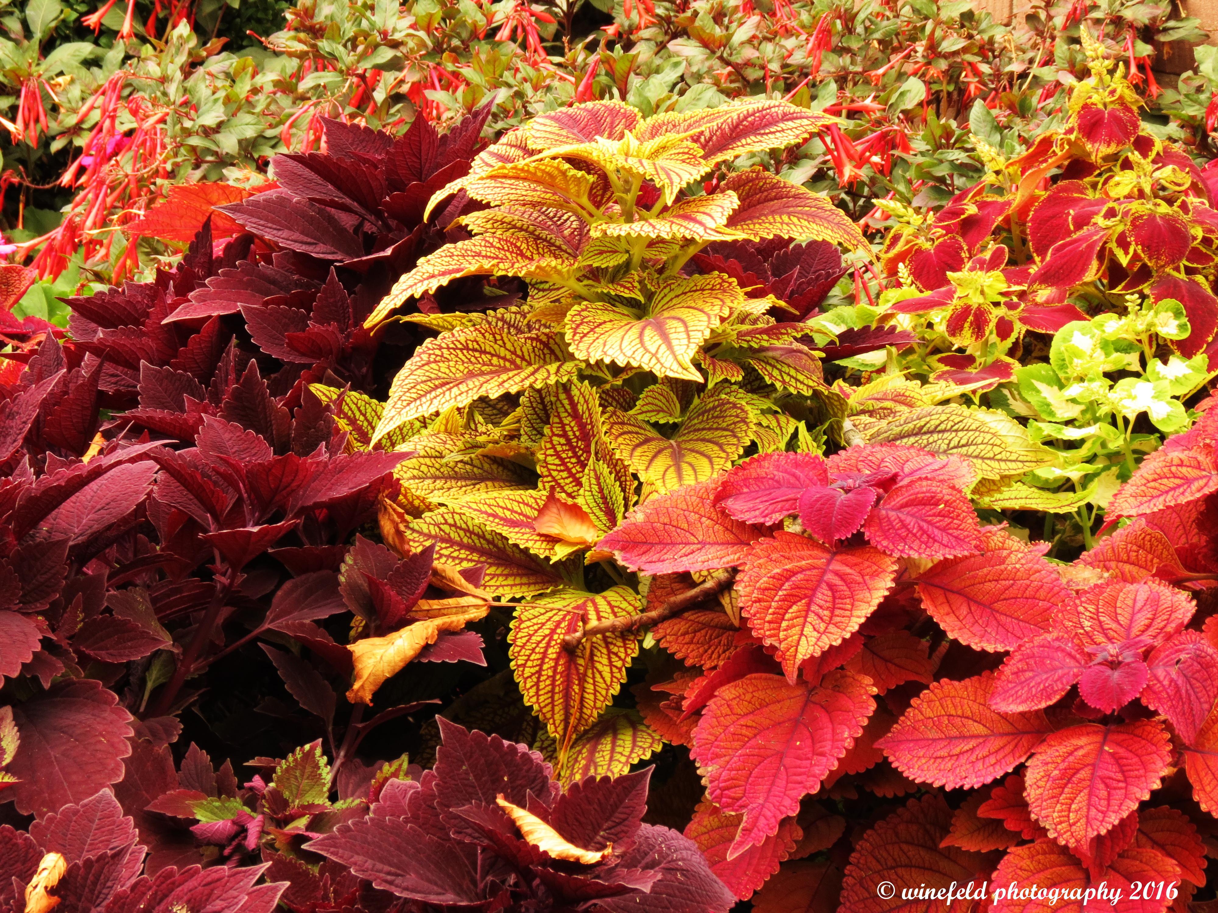Pflanzen im herbst herbstdeko fur den garten herbst - Pflanzen fur den vorgarten ...