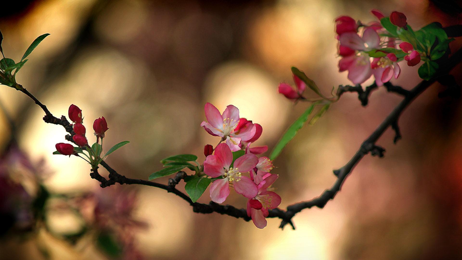 обои на телефон весна природа самсунг мосс предстояло парить