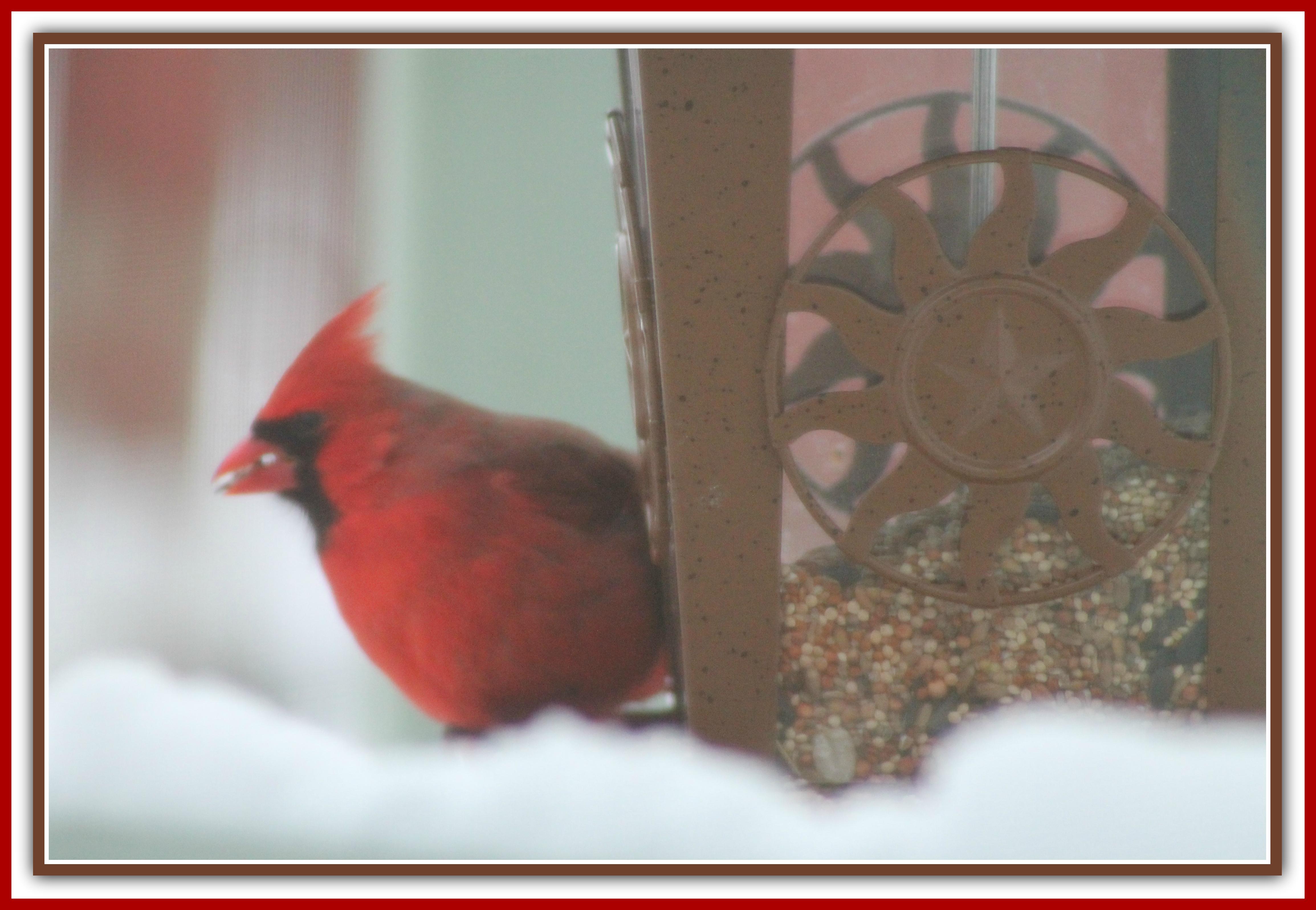 Hintergrundbilder : Natur, rot, Flügel, Gefieder, Rahmen, hell, Saat ...