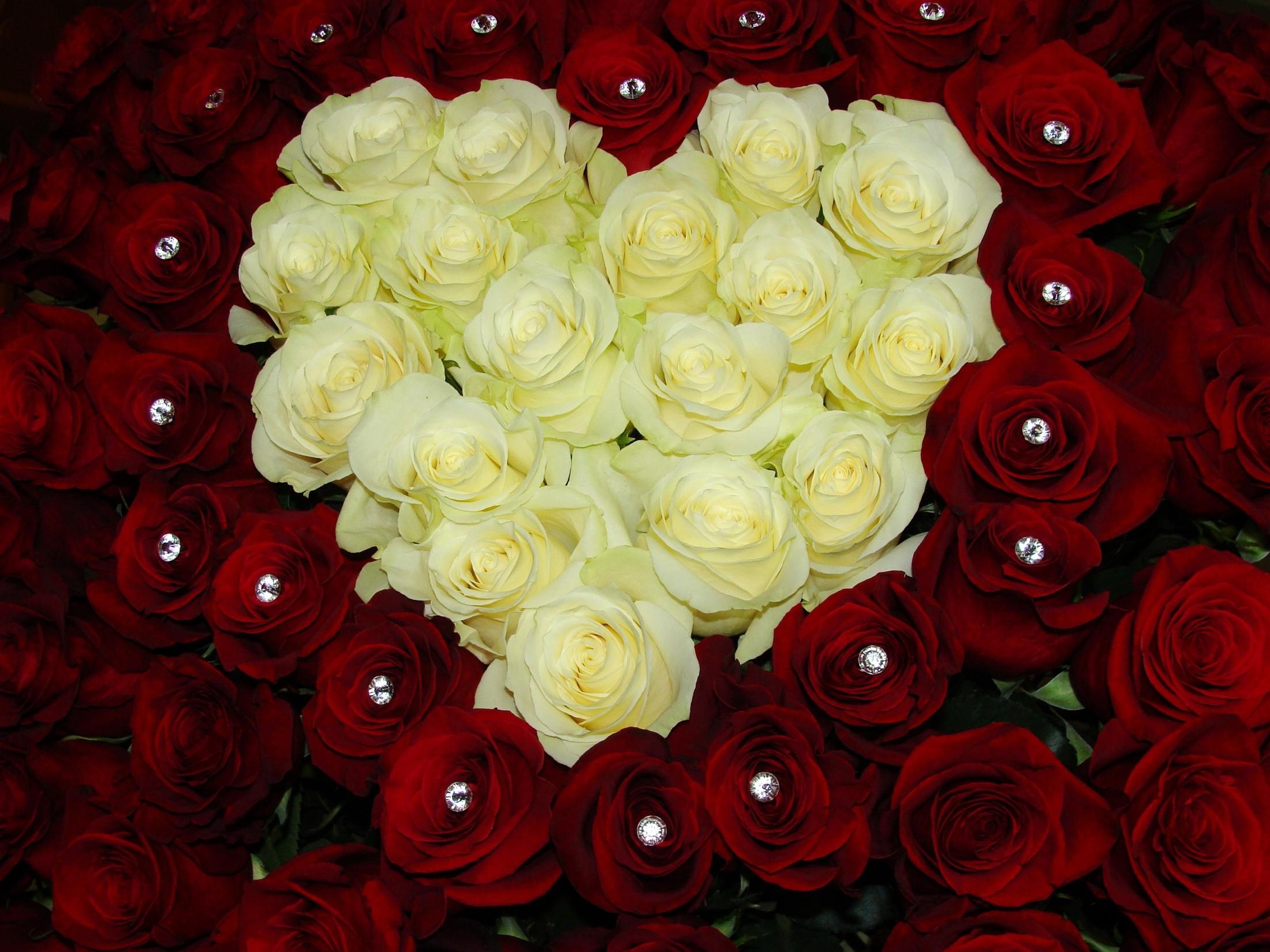 Фото много цветов розы