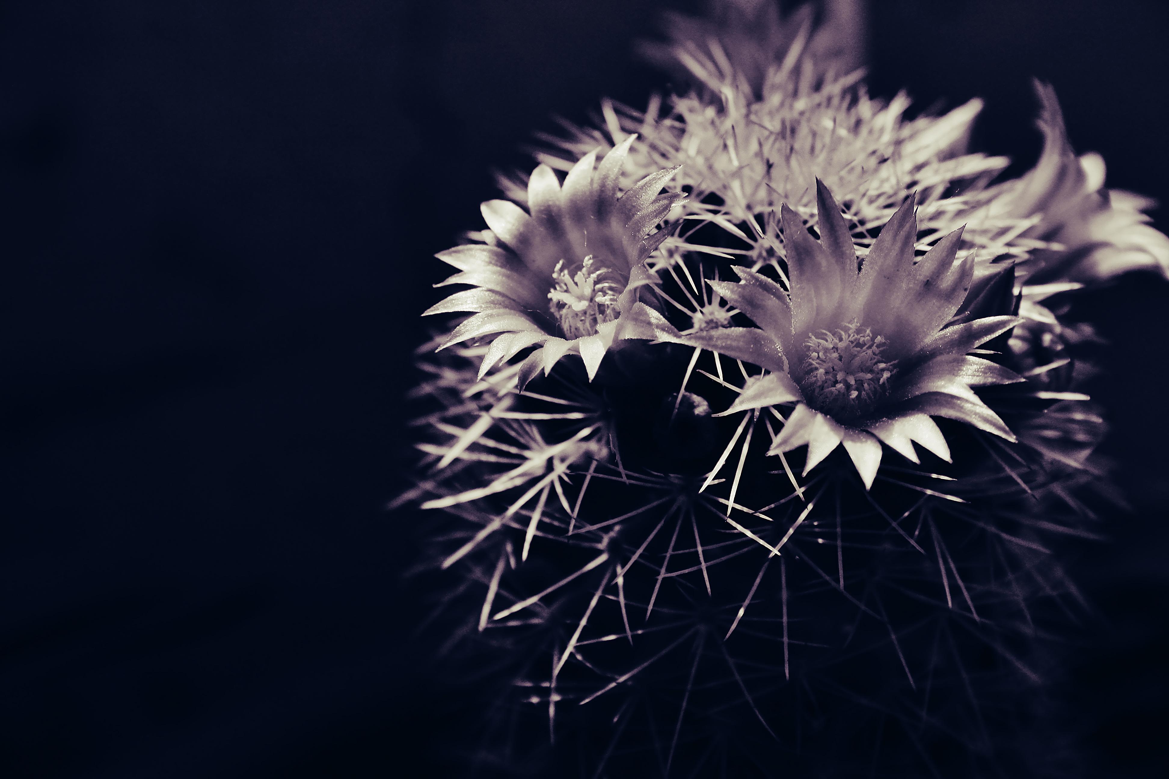 Hình nền : thiên nhiên, Bầu trời, nhiếp ảnh, màu tím, Vĩ mô, cây xương rồng, Mùa xuân, chi tiết, Quốc gia, thực vật, Hệ thực vật, bóng tối, Cánh hoa, ...
