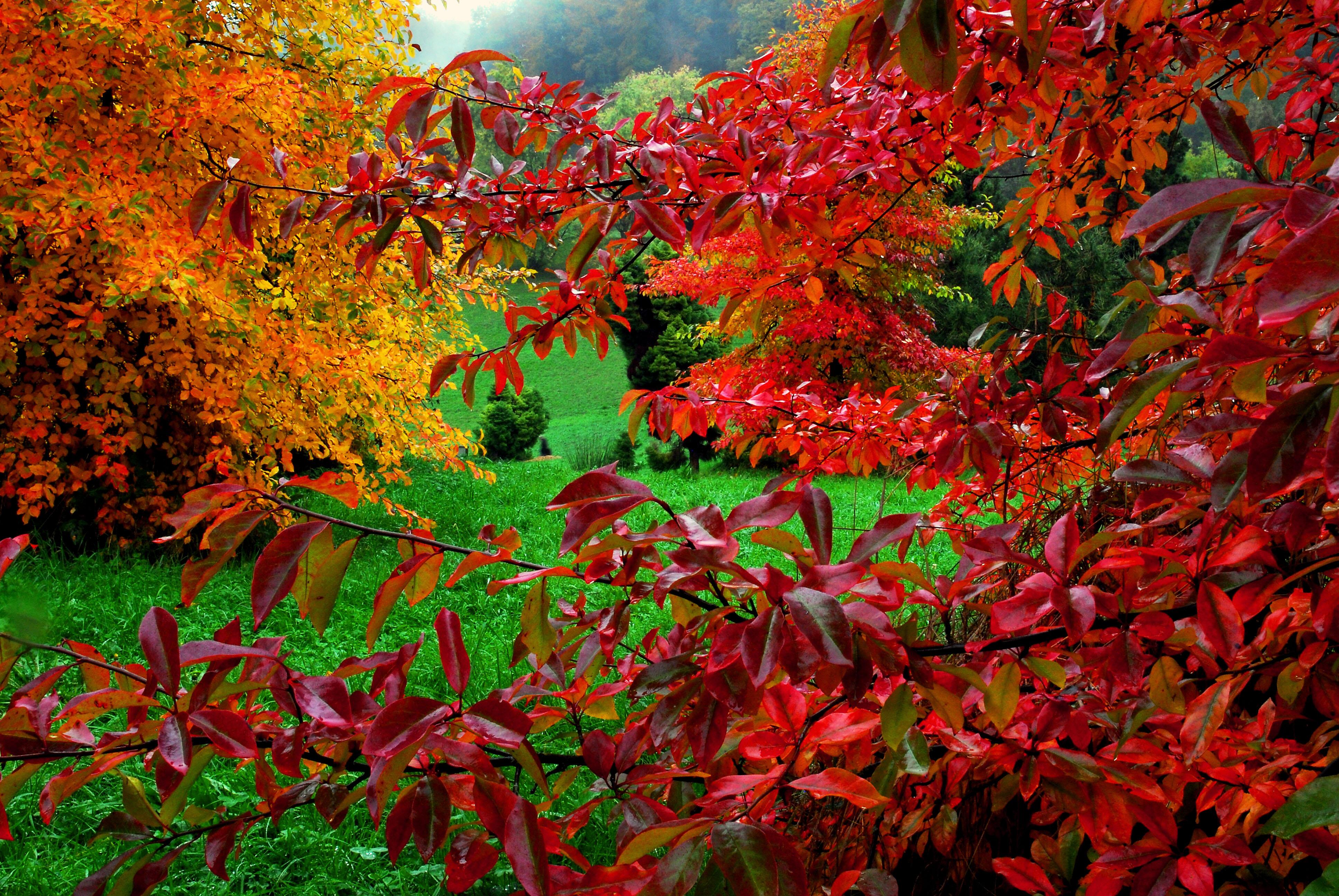 Wallpaper Nature Vegetation Autumn Flora Deciduous