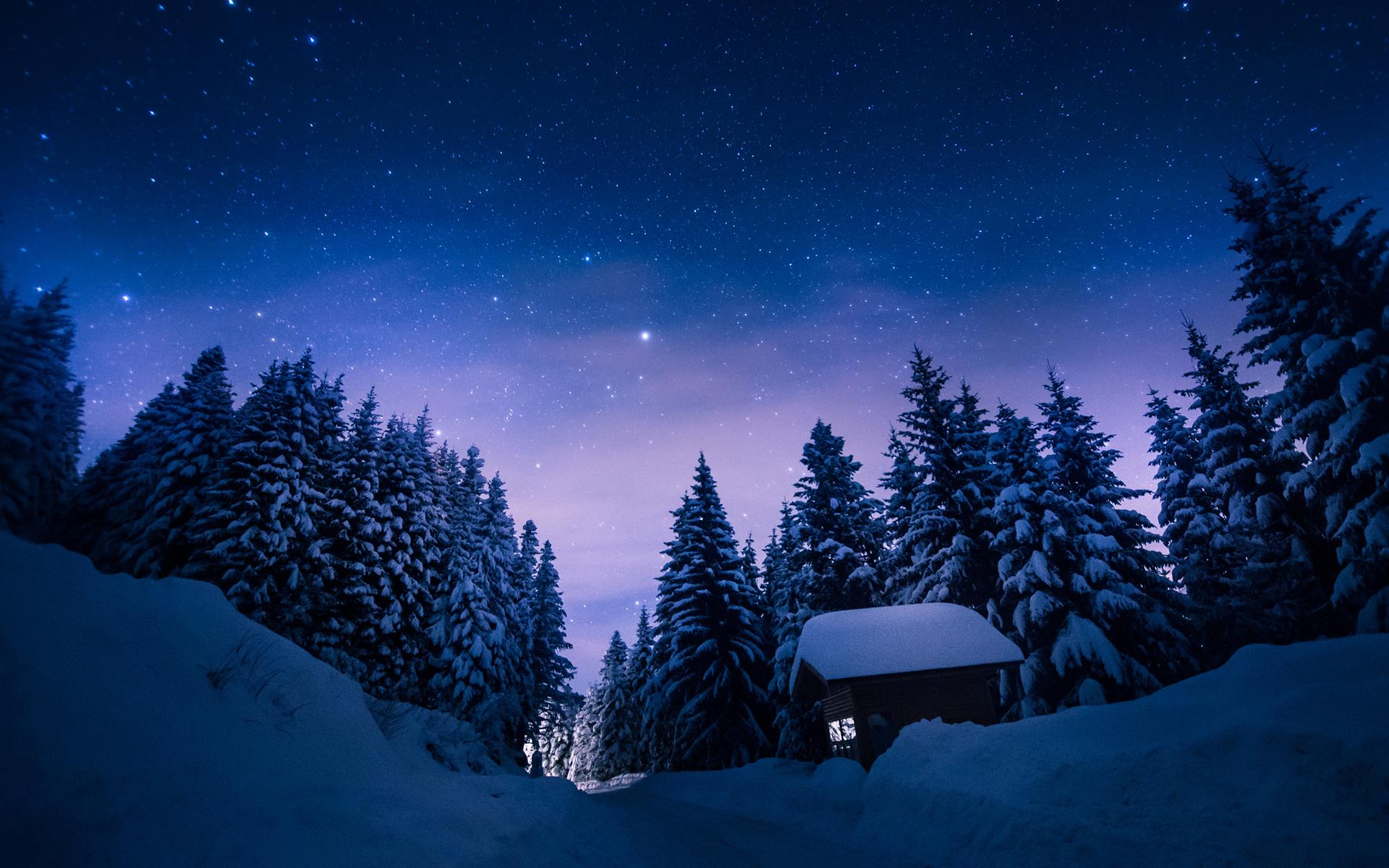 человек картинки рождественская ночь в лесу если сегодня