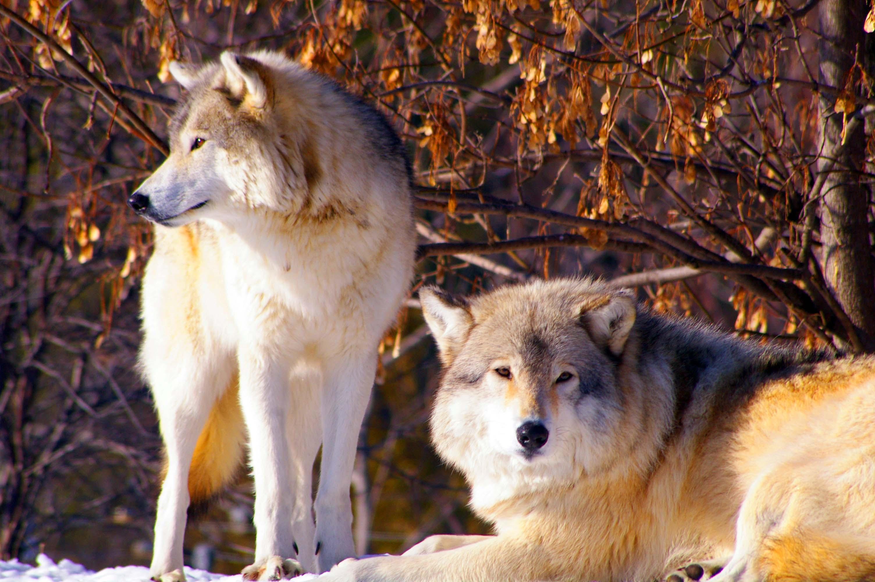 морем, иль фото волчьей семьи освенцима подвергались