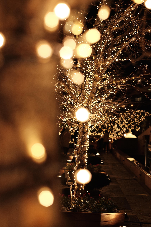 Fond d\'écran : nuit, branche, Arbre de Noël, lumières de Noël, Tokyo ...