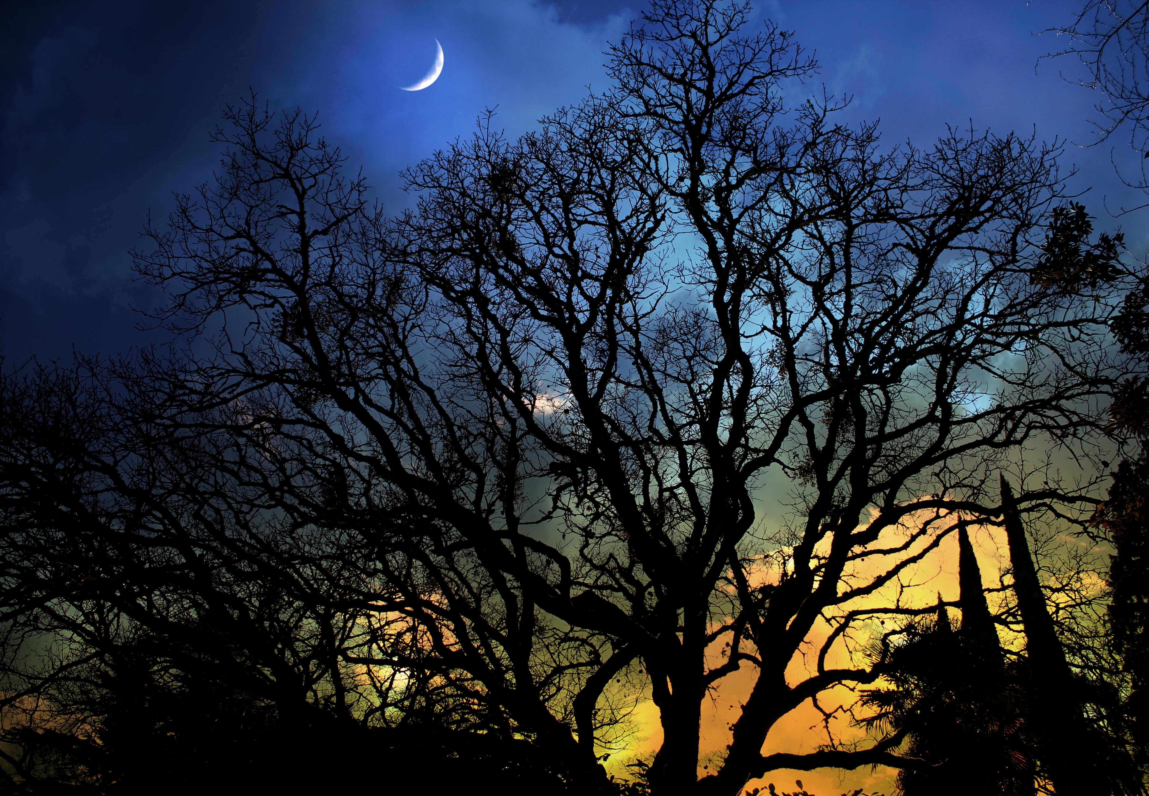картинки деревьев ночью помимо