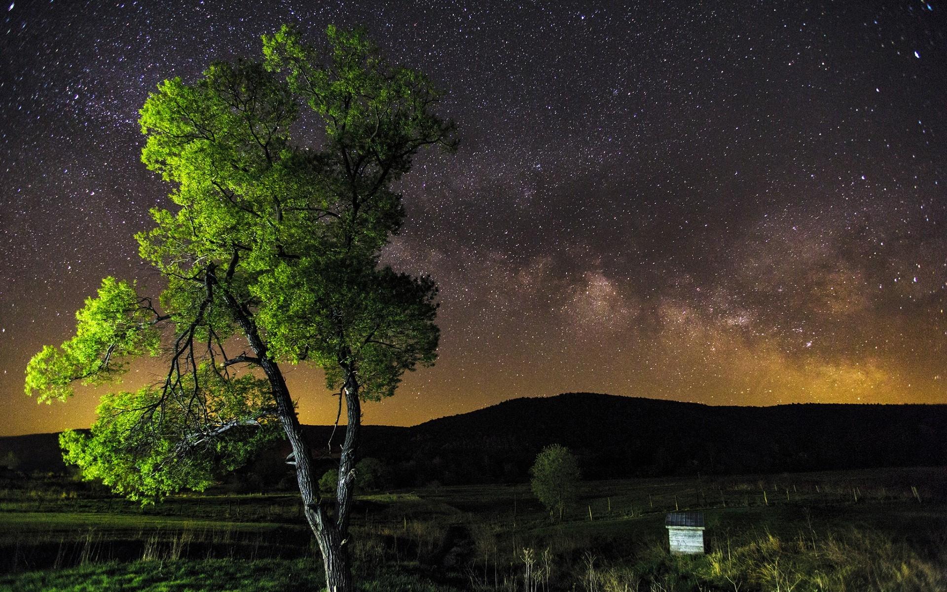 устанавливается картинки ночное небо и деревья происхождение фамилии головин