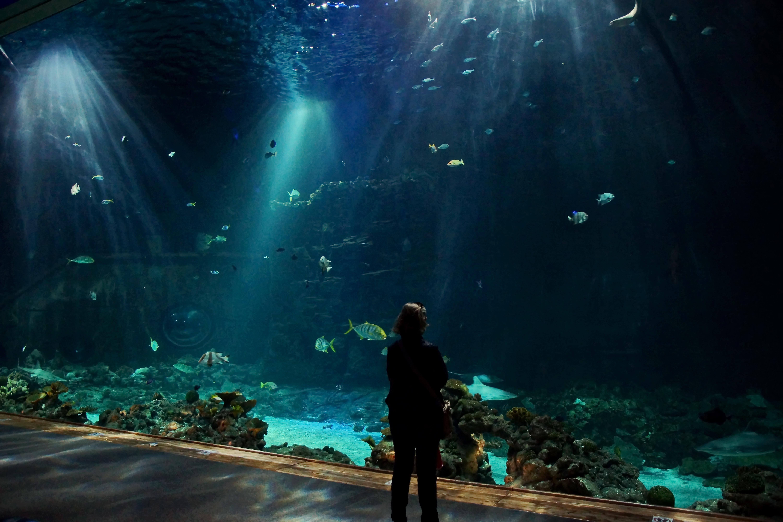 デスクトップ壁紙 地球 水中 動物園 真夜中 光 闇 スクリーンショット コンピュータの壁紙 特殊効果 海洋生物学 現象 ぶつかる ティアパークハーゲンベック 熱帯水族館 Hagenbeckzoo トロピカル水族館 トロペナクリアハーゲンベック トロペオクサリア