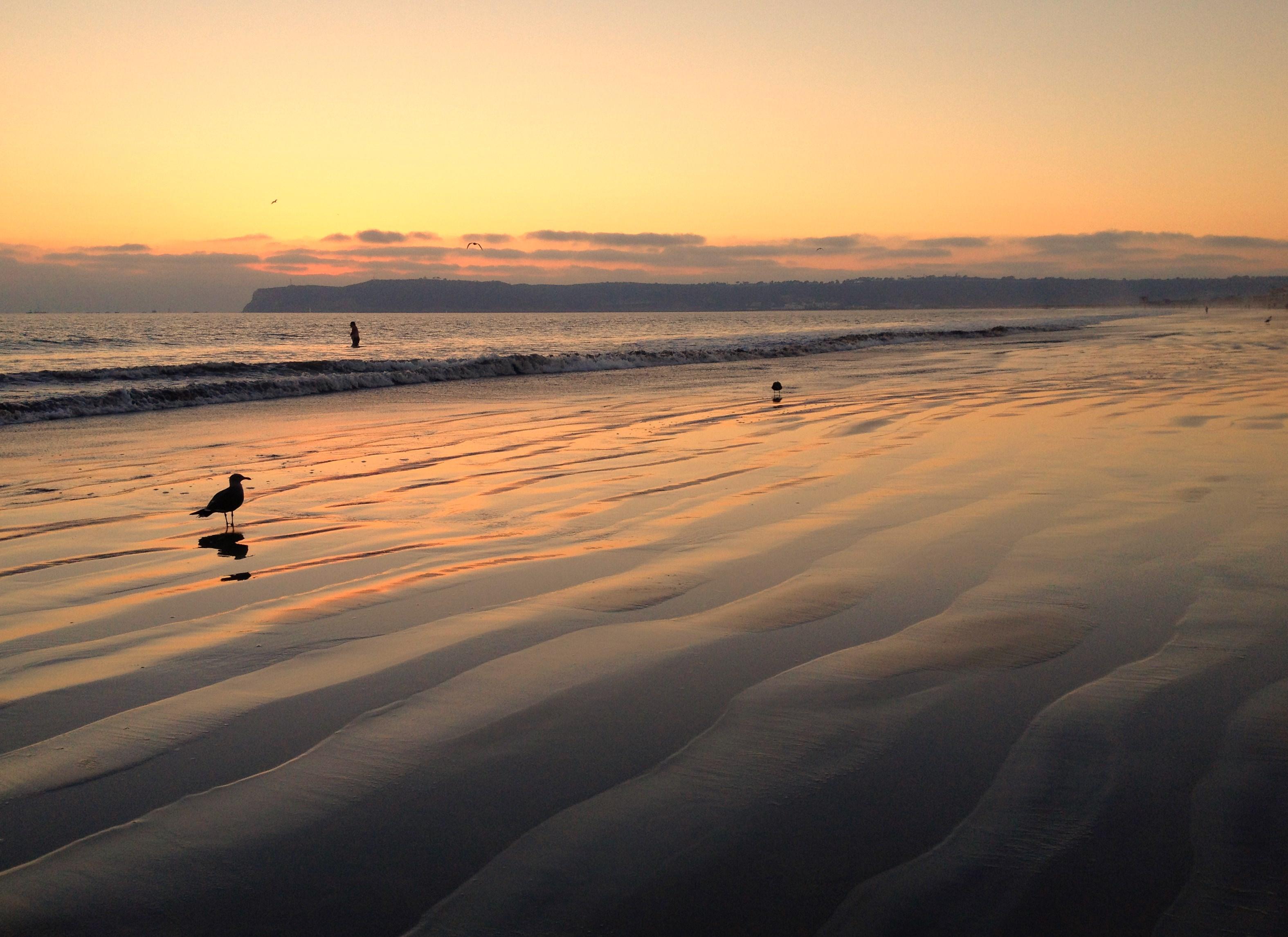 Wallpaper Ocean California Sunset Beach Island Pacific Sandiego Seagull Coronado Iphone Coronadoisland Coronadobeach 3149x2291 978102 Hd Wallpapers Wallhere