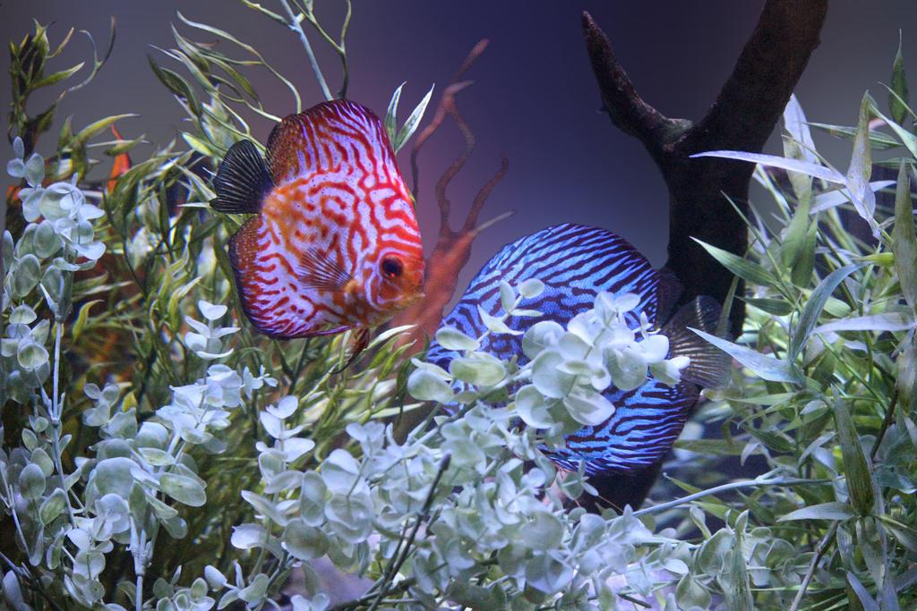 правило, новые картинки с рыбками самом деле