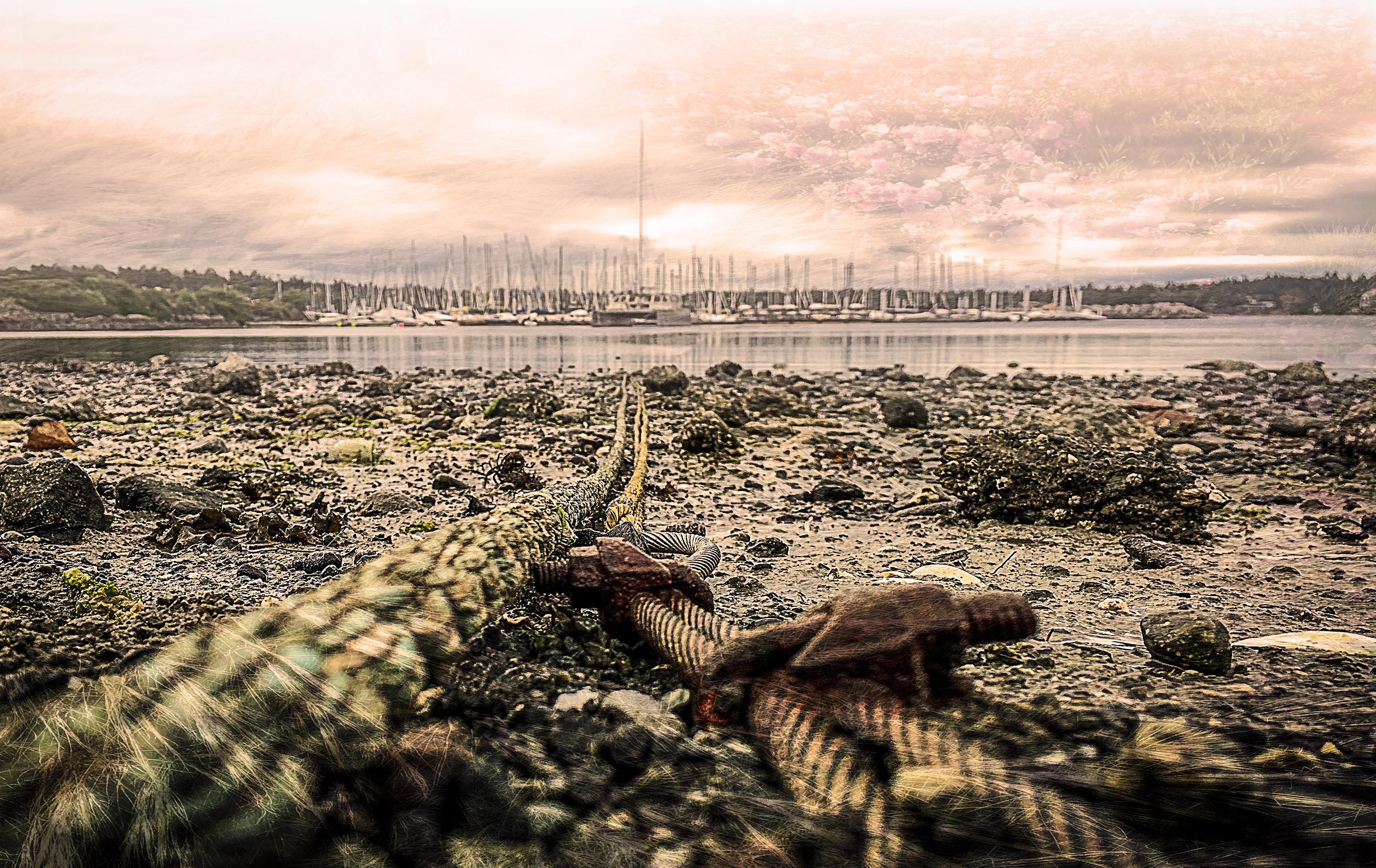 Sfondi Oceano Rosa Mare Rose Cielo Sole Alga Marina