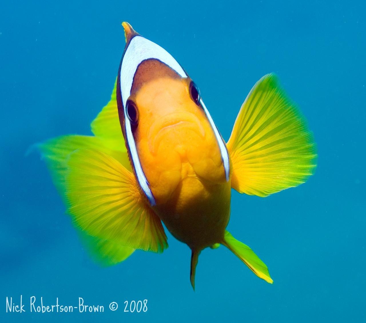 Tapety : oceán, Ryba, logo, Pod vodou, Dahab, Rudé moře ...