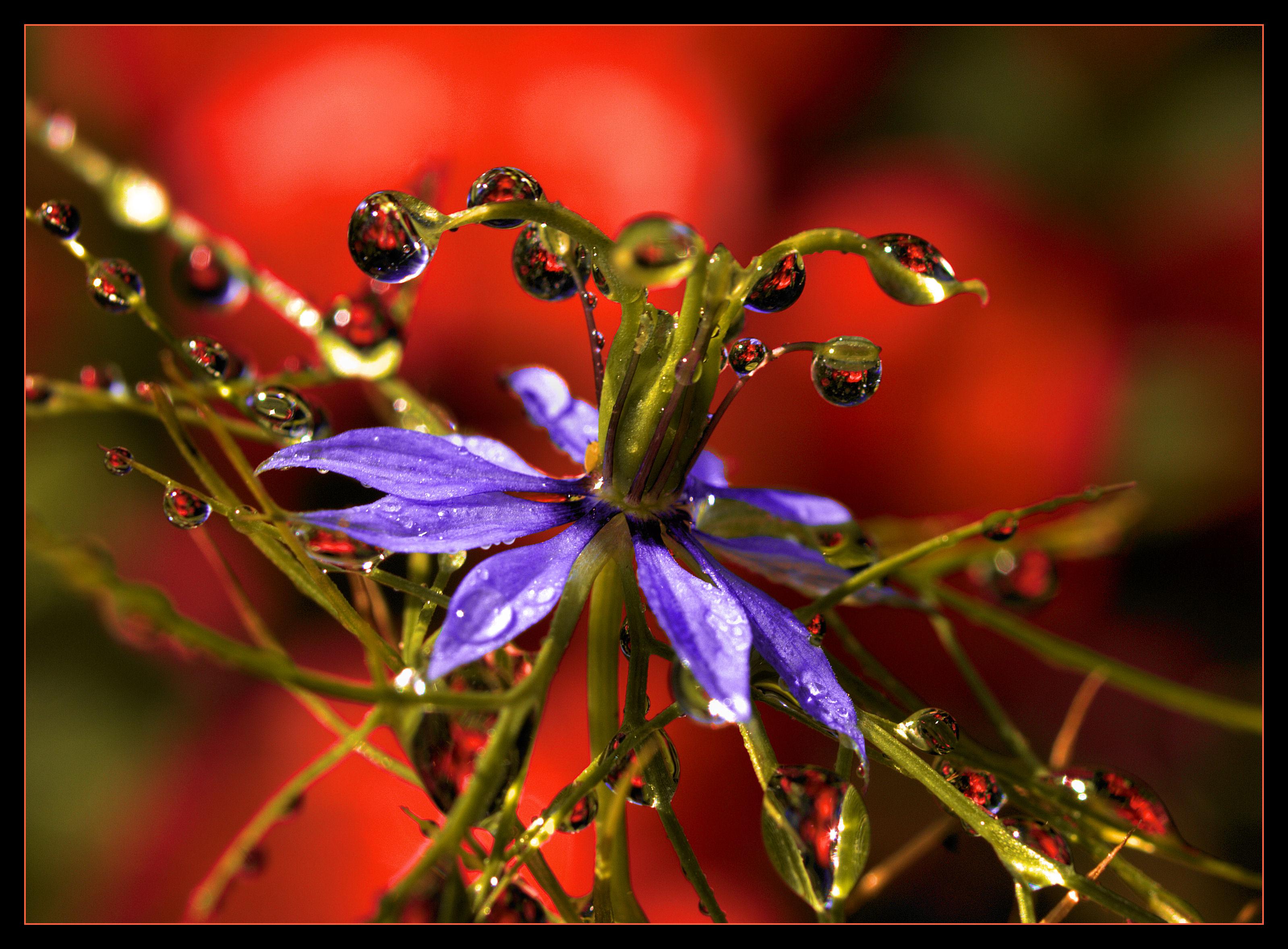 Wallpaper Orange Flower Macro Green Fleur Rouge Olympus