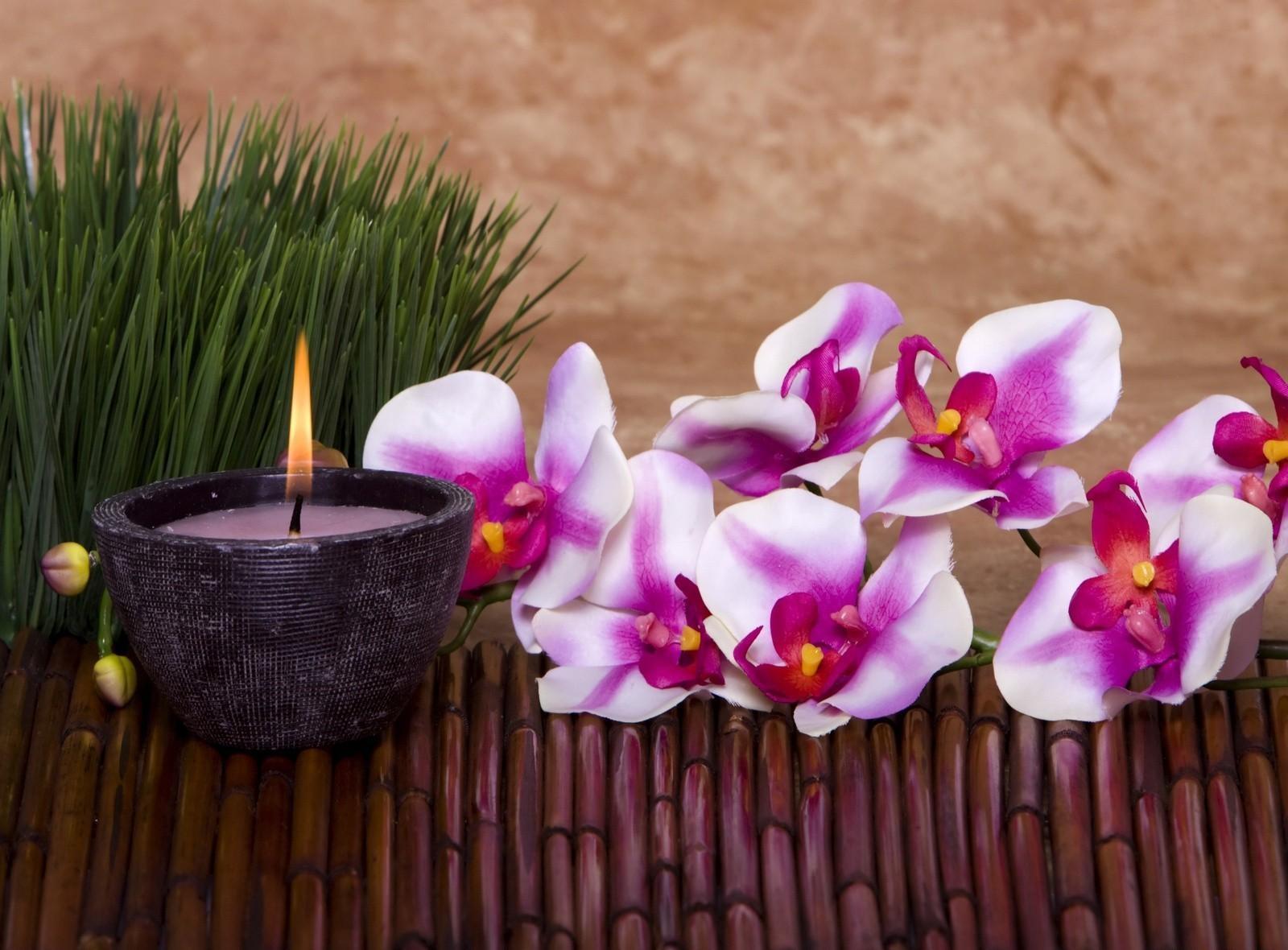 Fond D Ecran Orchidee Fleur Bougie Herbe Bambou 1600x1180 Coolwallpapers 685598 Fond D Ecran Wallhere