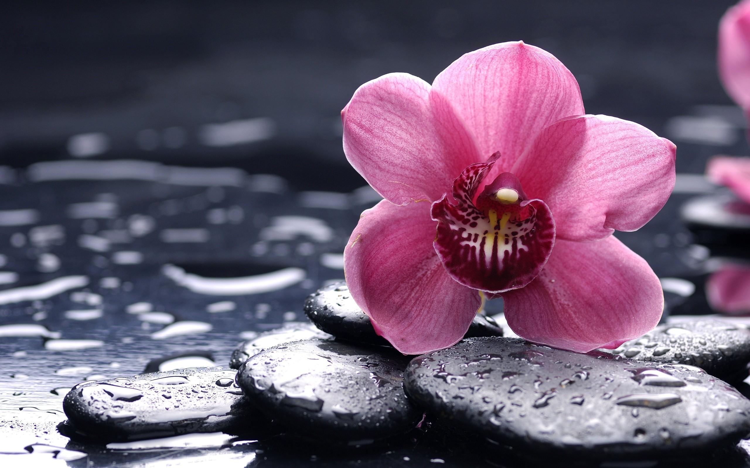Orchidee Fond Ecran