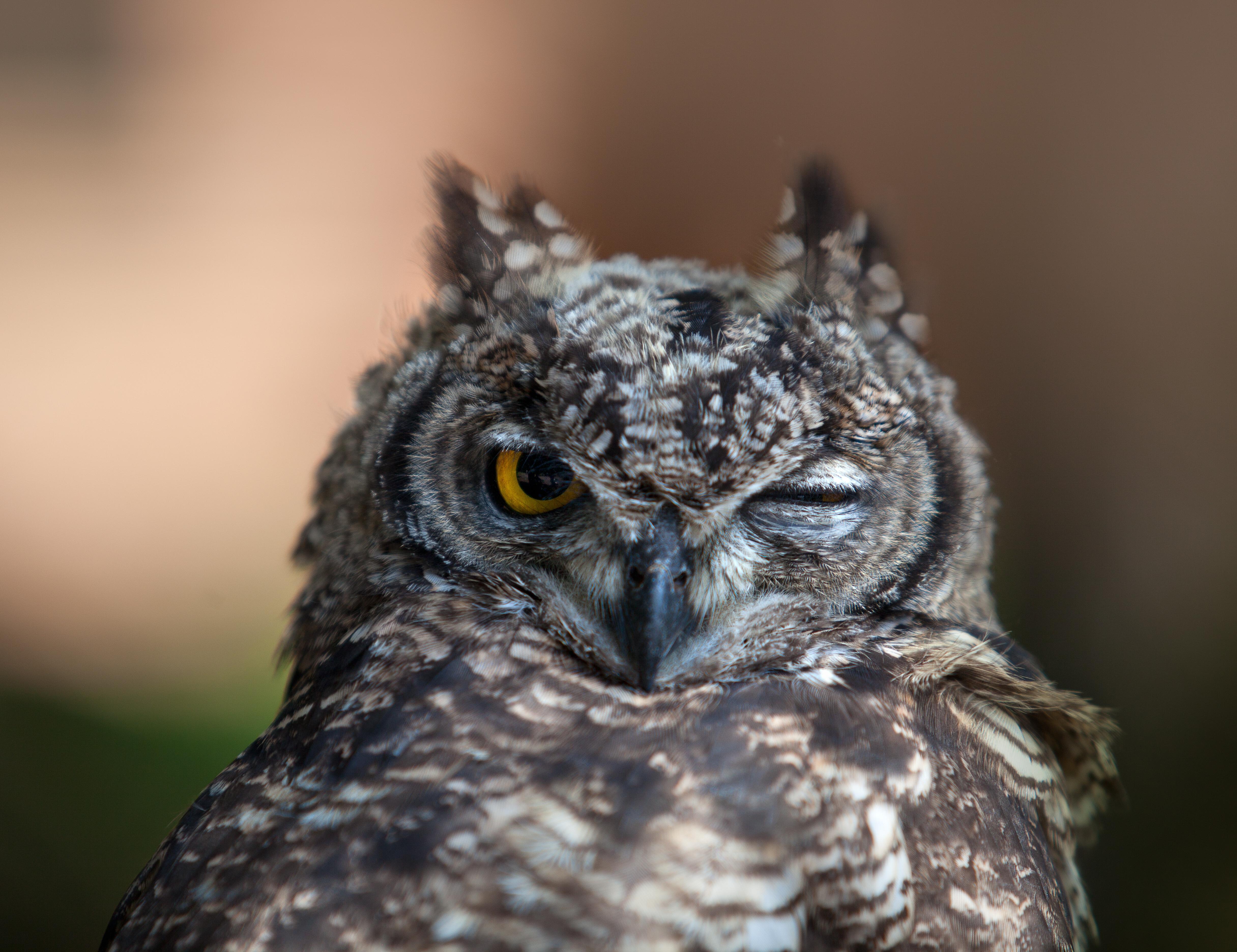 картинки на аву животных и птицы мастер-класс идеальное безе