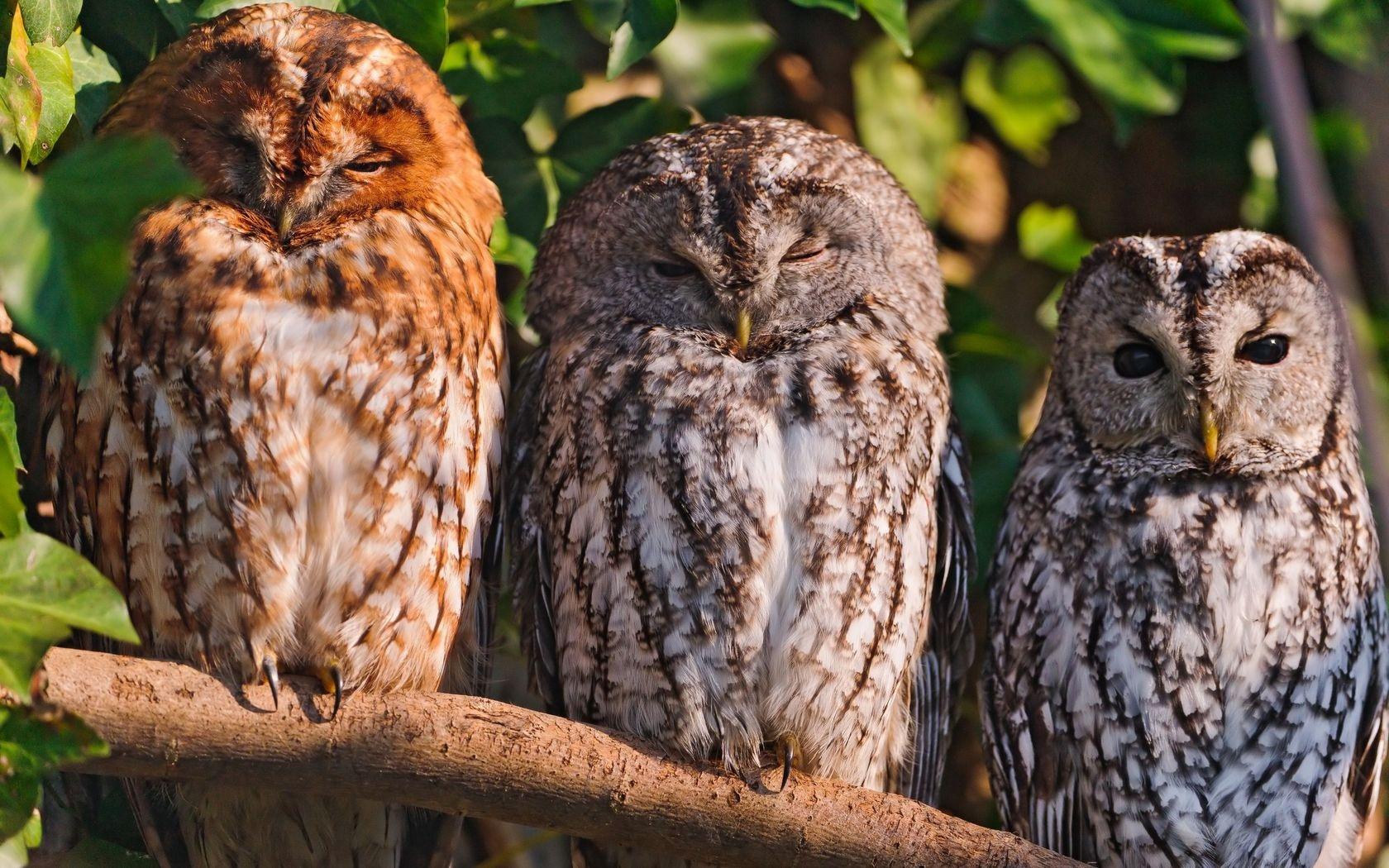 автора три птички картинки как обещал, традиционной