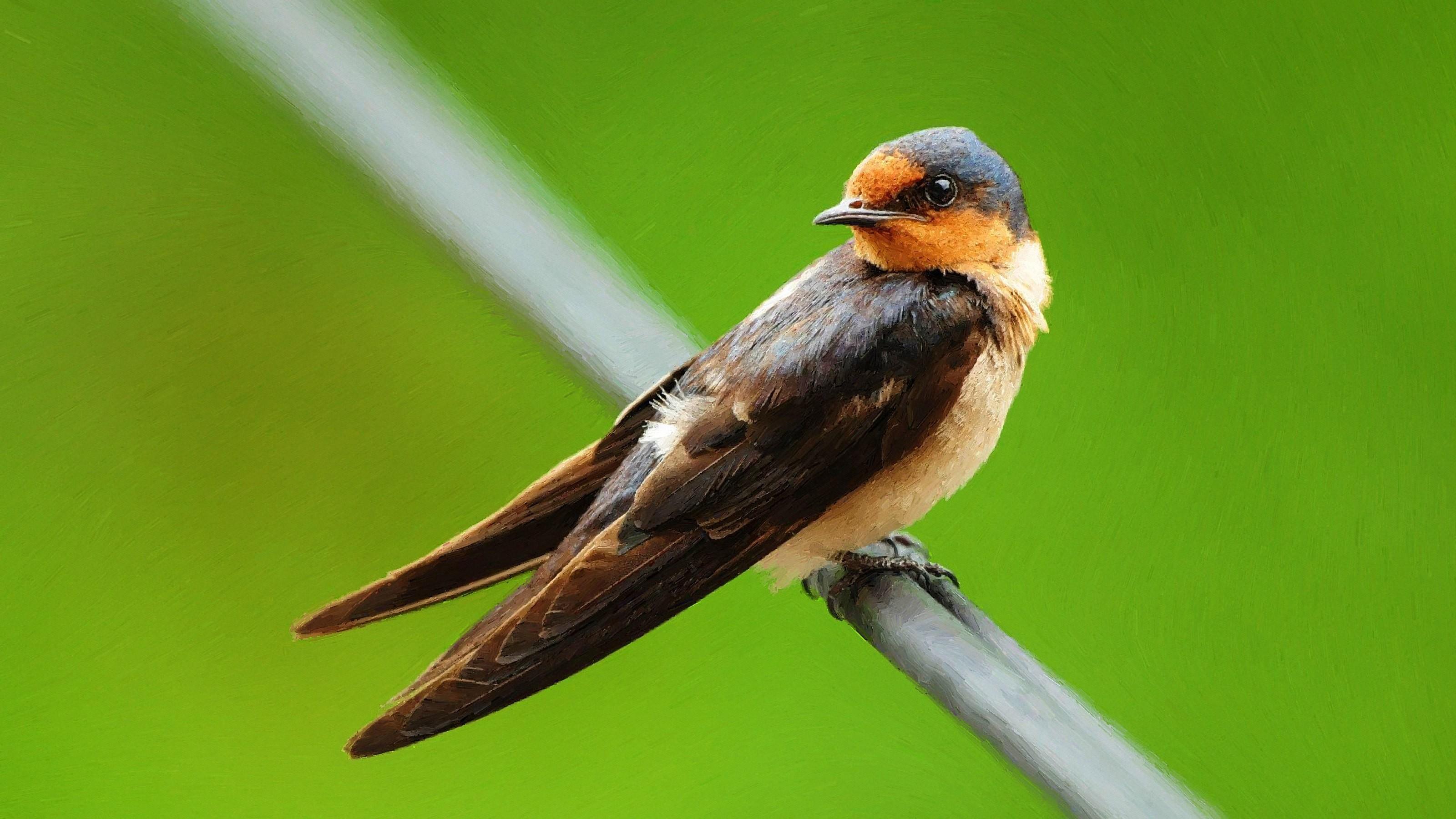 Masaüstü Boyama Kuşlar Hayvanlar Doğa Resim Yeşil Vahşi