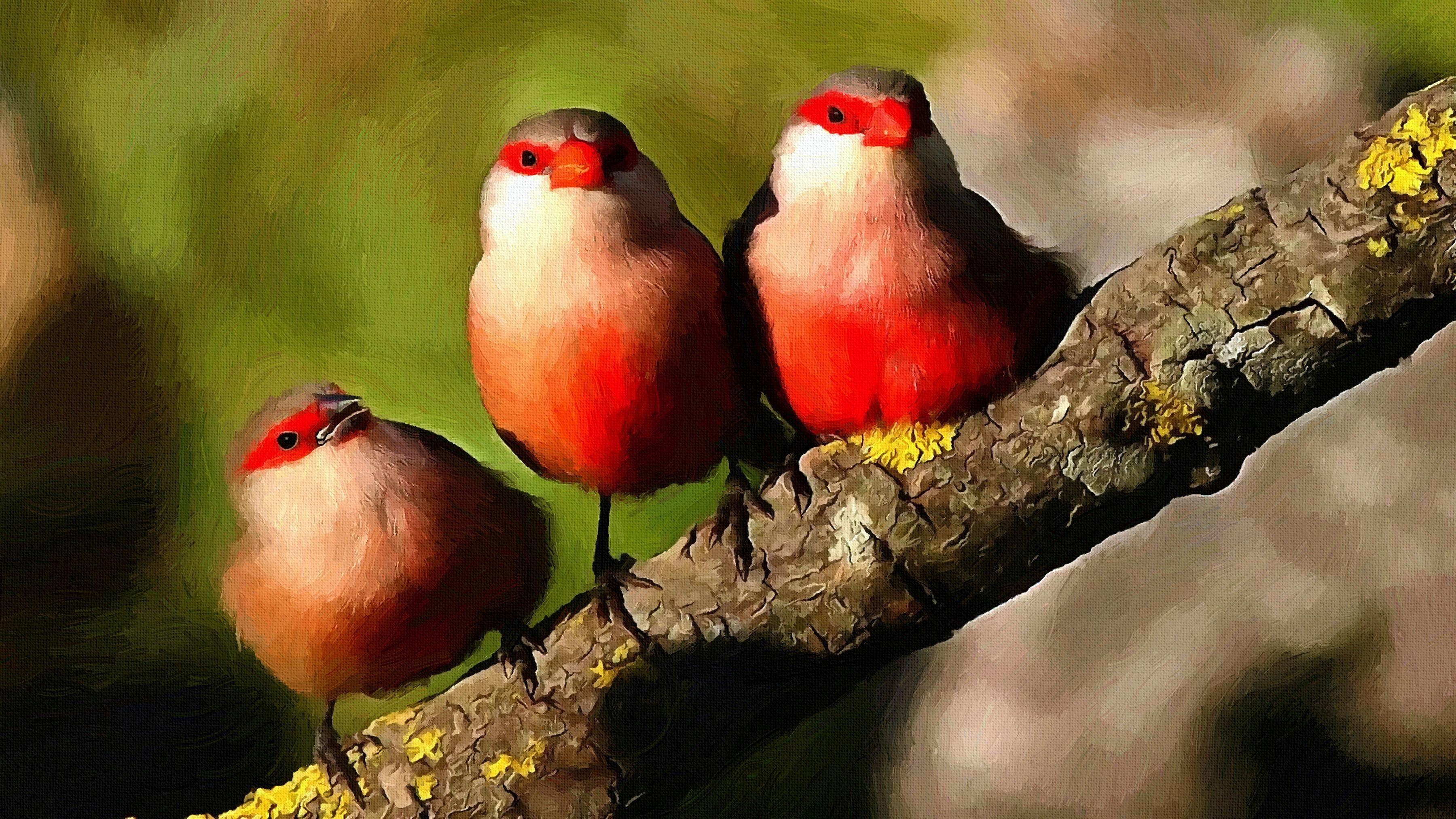 Masaüstü Boyama Kuşlar Doğa Papağan Kırmızı şube Vahşi Hayat