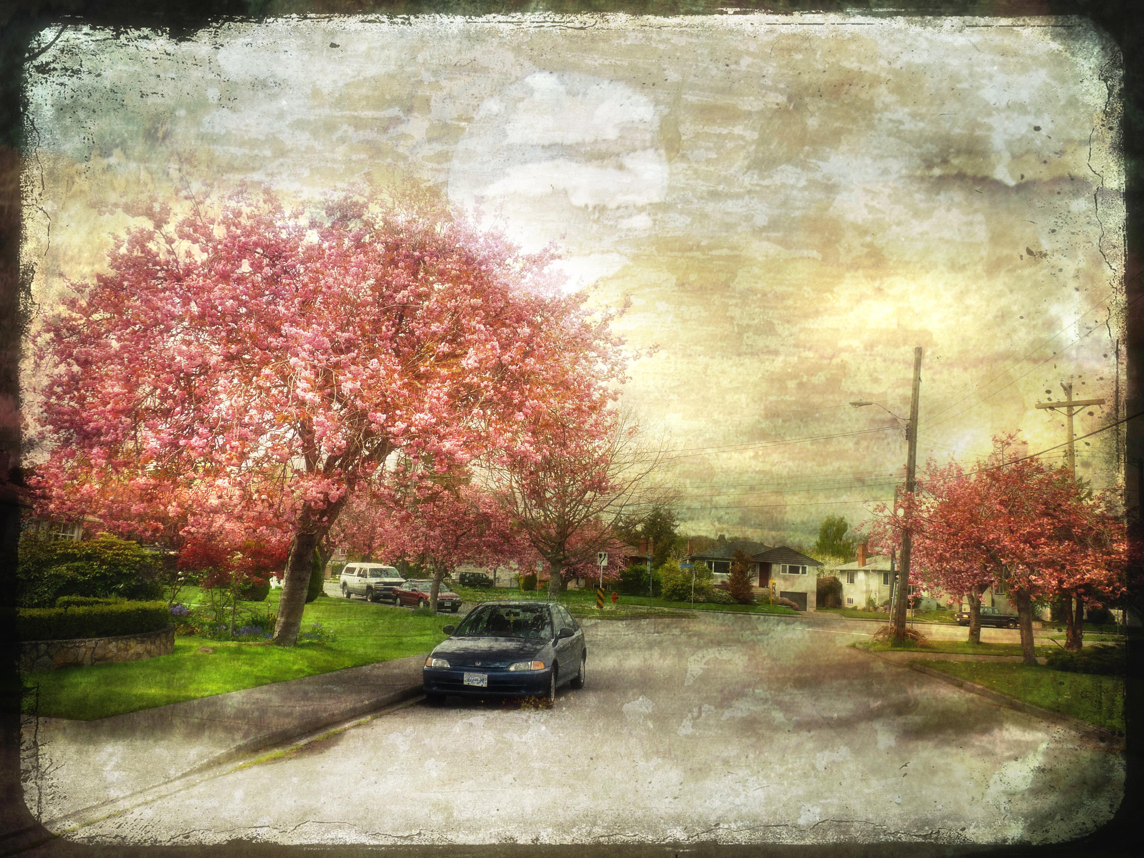 Masaüstü Boyama Araba çiçeği Bahar Nisan Ağaç Sonbahar