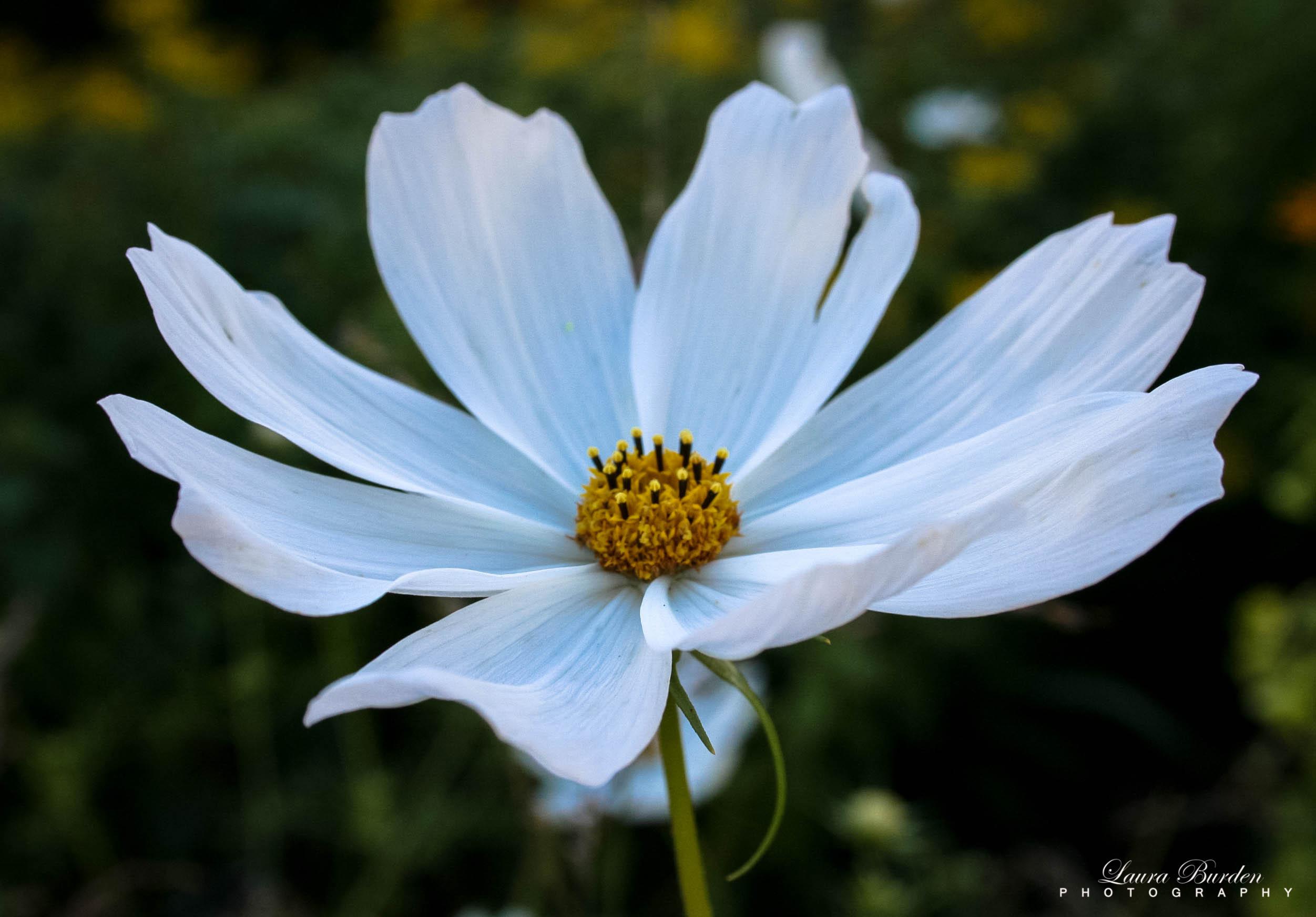 Masaüstü Boyama Yapraklar Beyaz Doğa Alan Fotoğraf Kapatmak