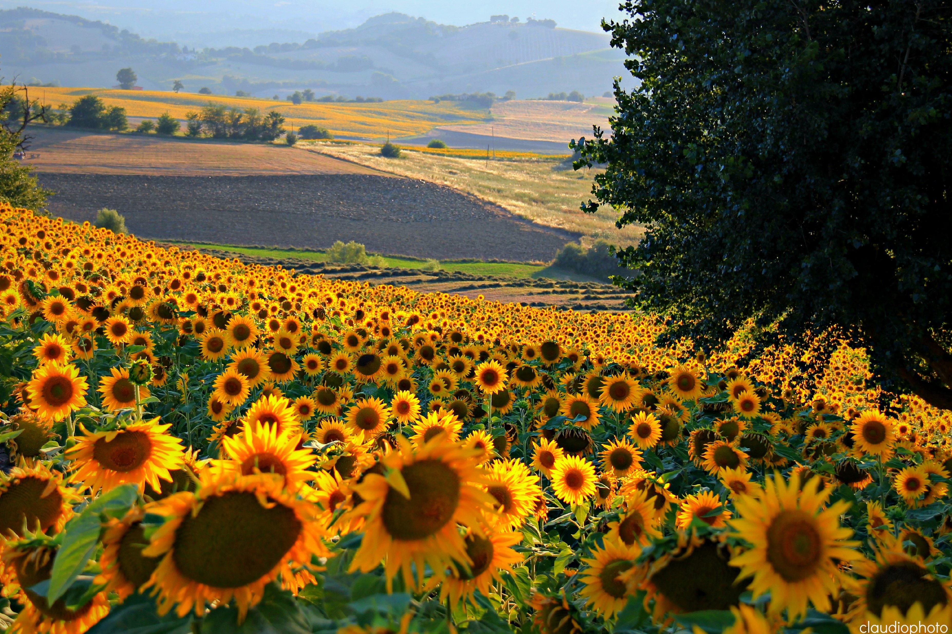 Sfondi panorama paesaggio campagna paesaggi marche for Foto paesaggi gratis