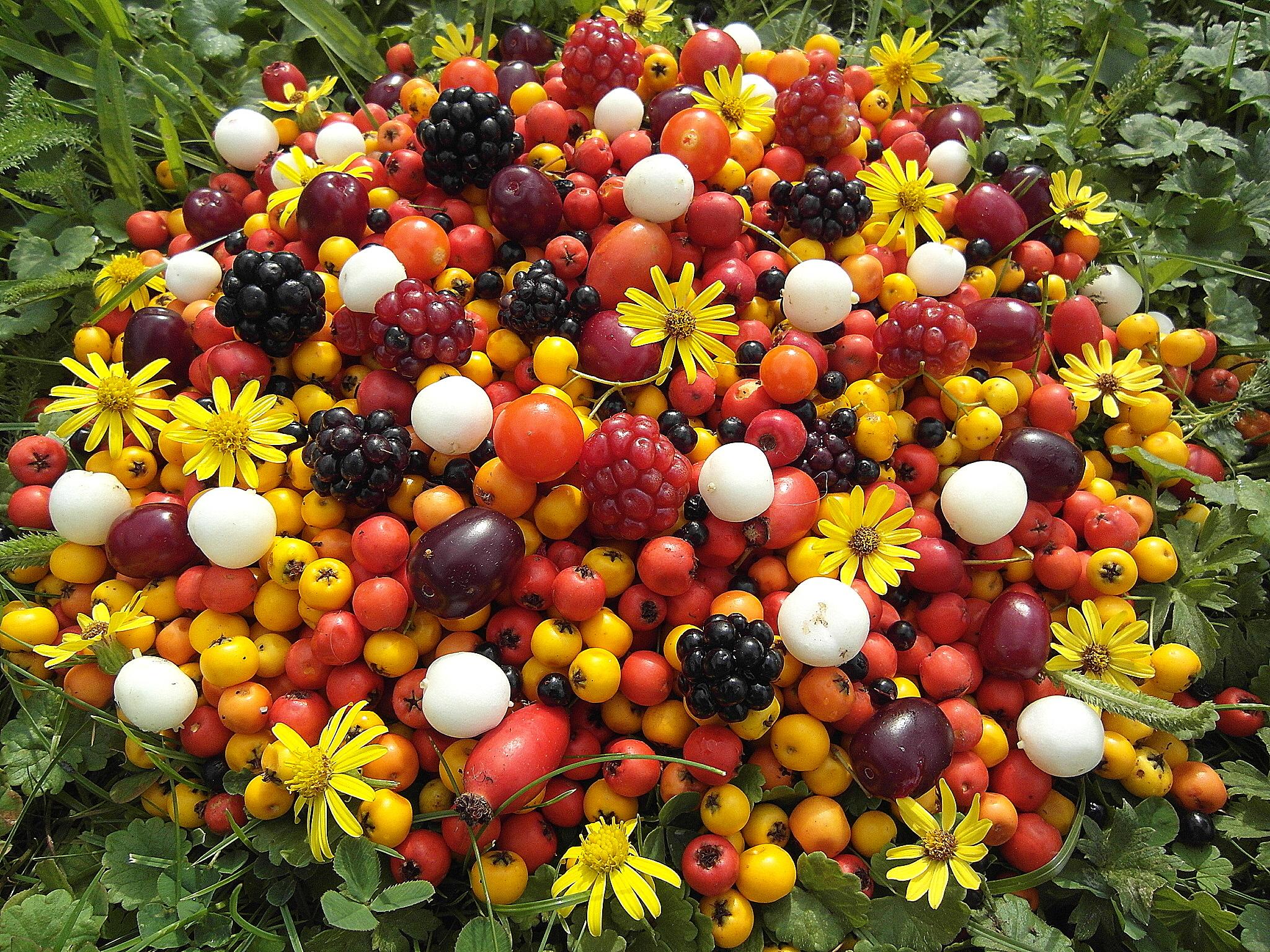 Hintergrundbilder : Park, Blumen, Licht, rot, Porträt, Sonne, Farbe ...