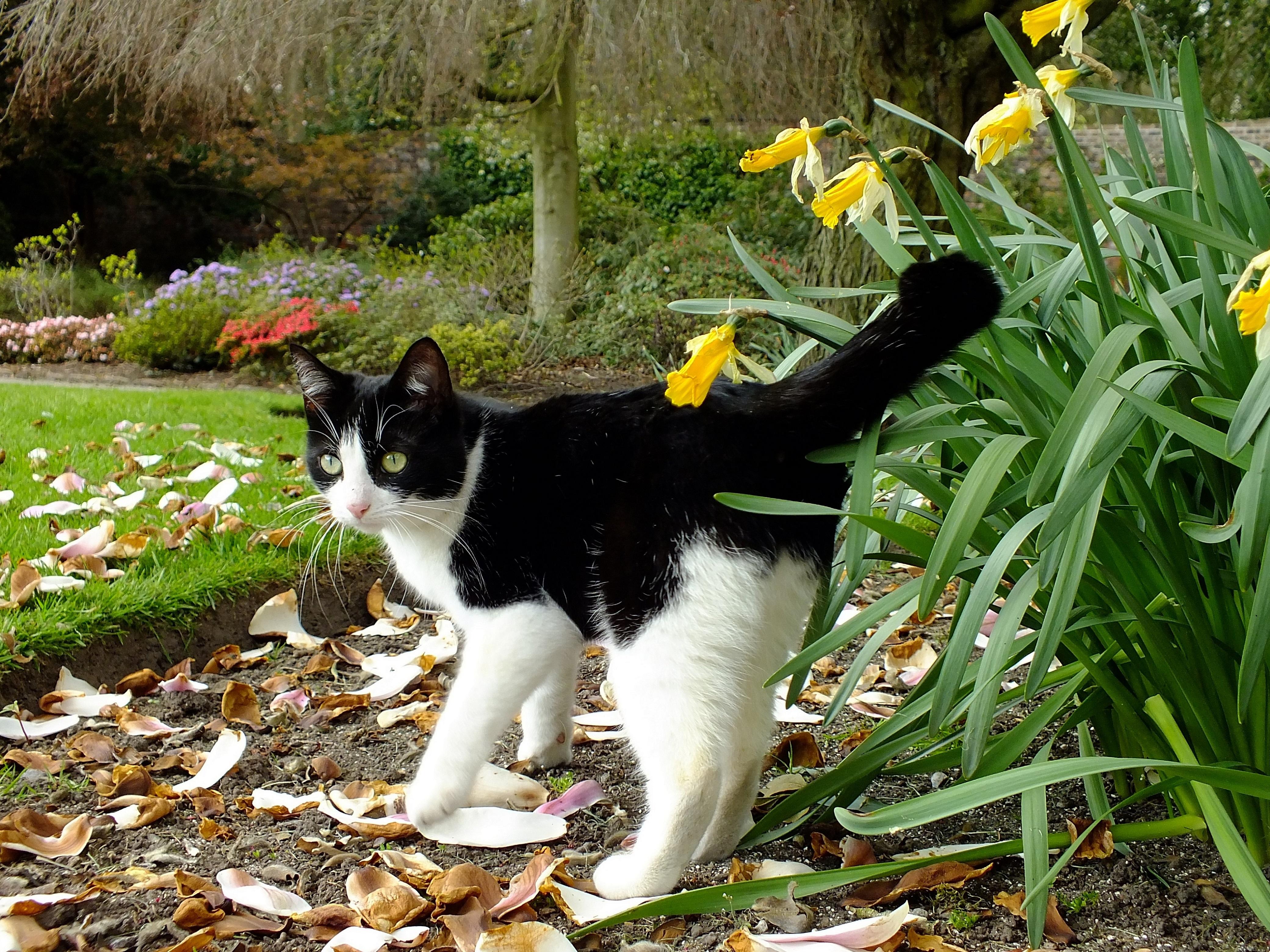 Hintergrundbilder Park Blumen Rot Orange Haustier Weiss