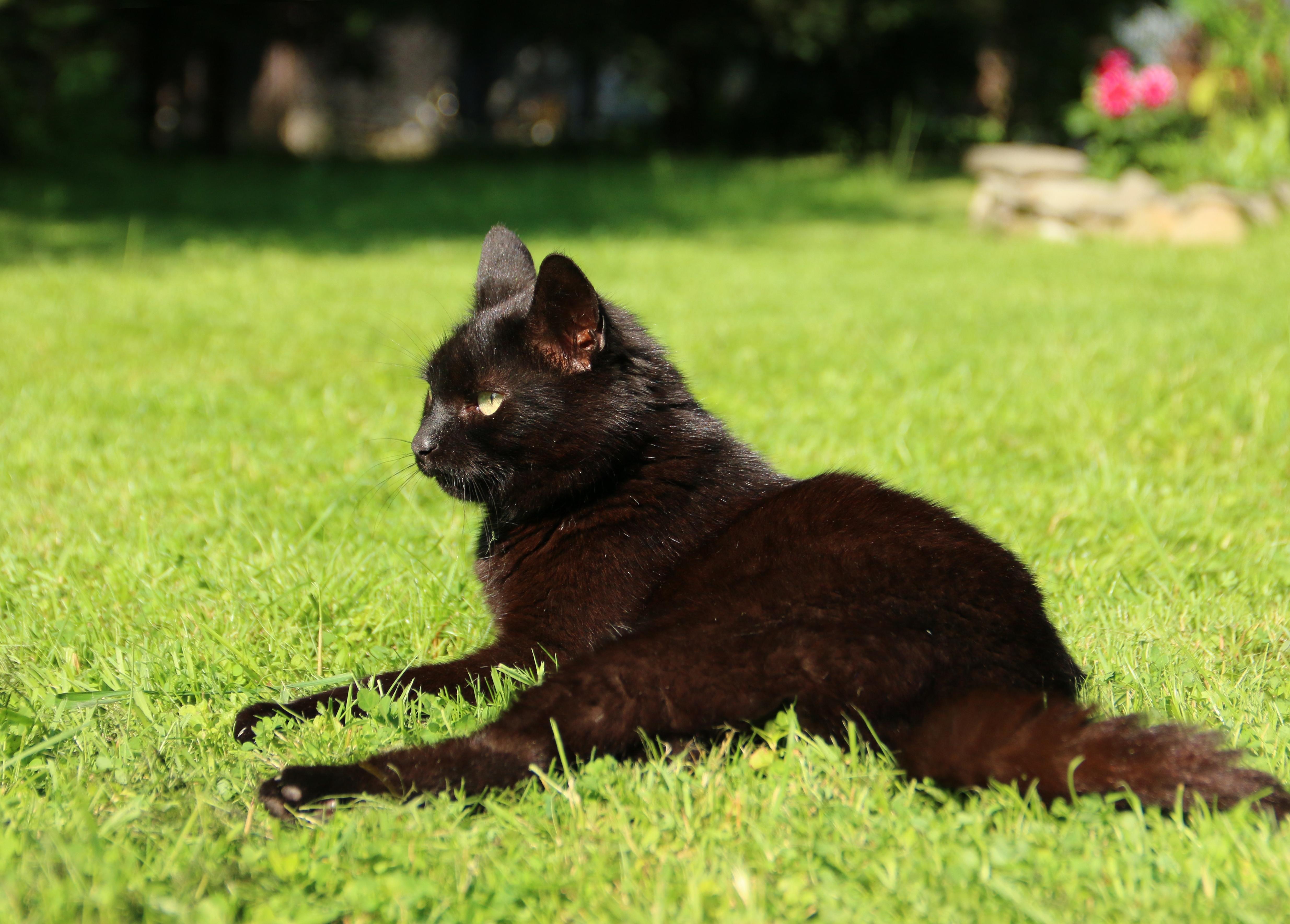 Kot im garten von welchem tier great katzenkot im garten luxe was tun gegen marder im garten - Was kann man gegen marder tun im garten ...