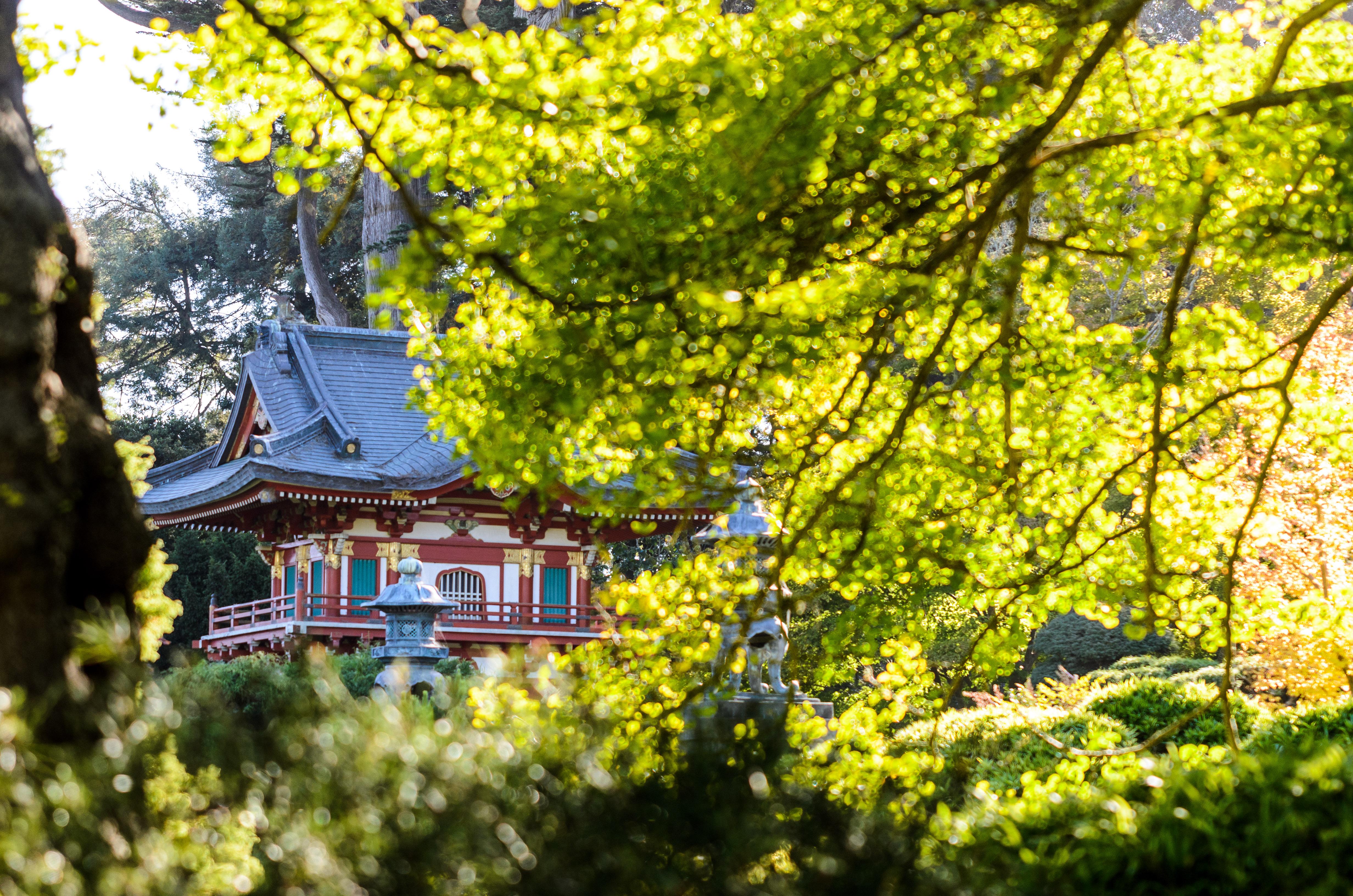Hintergrundbilder park licht usa geb ude baum sch n bl tter japan zusammensetzung - Garten asiatisch ...