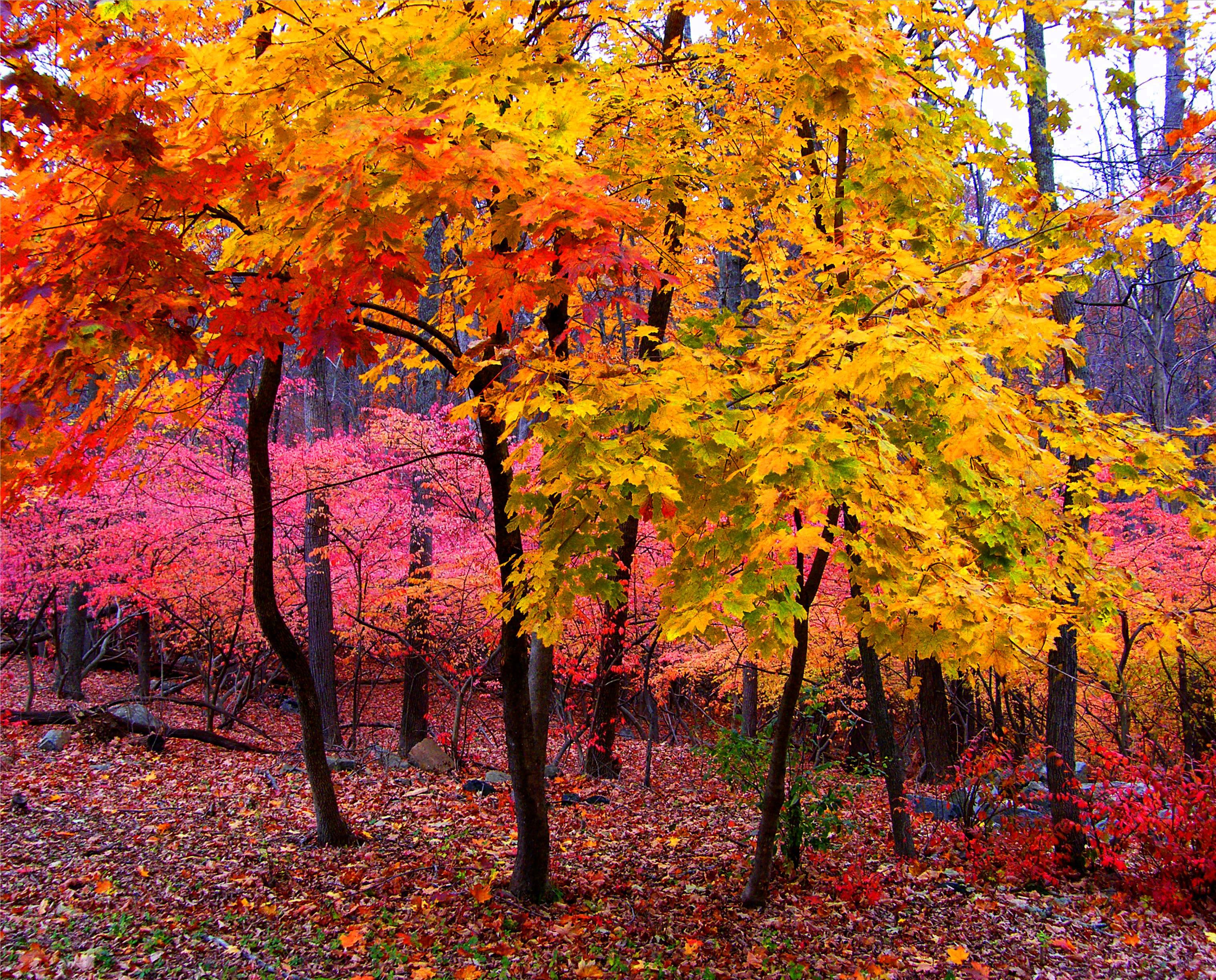 hintergrundbilder park rosa herbst b ume baum fallen natur farben bl tter gelb. Black Bedroom Furniture Sets. Home Design Ideas