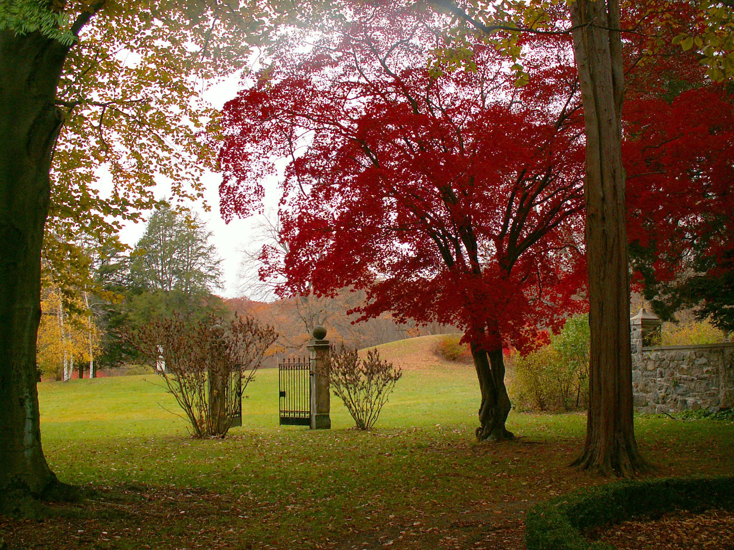 hintergrundbilder park rot baum sch n japanisch ahorn tor nj ringwood 2560x1920. Black Bedroom Furniture Sets. Home Design Ideas