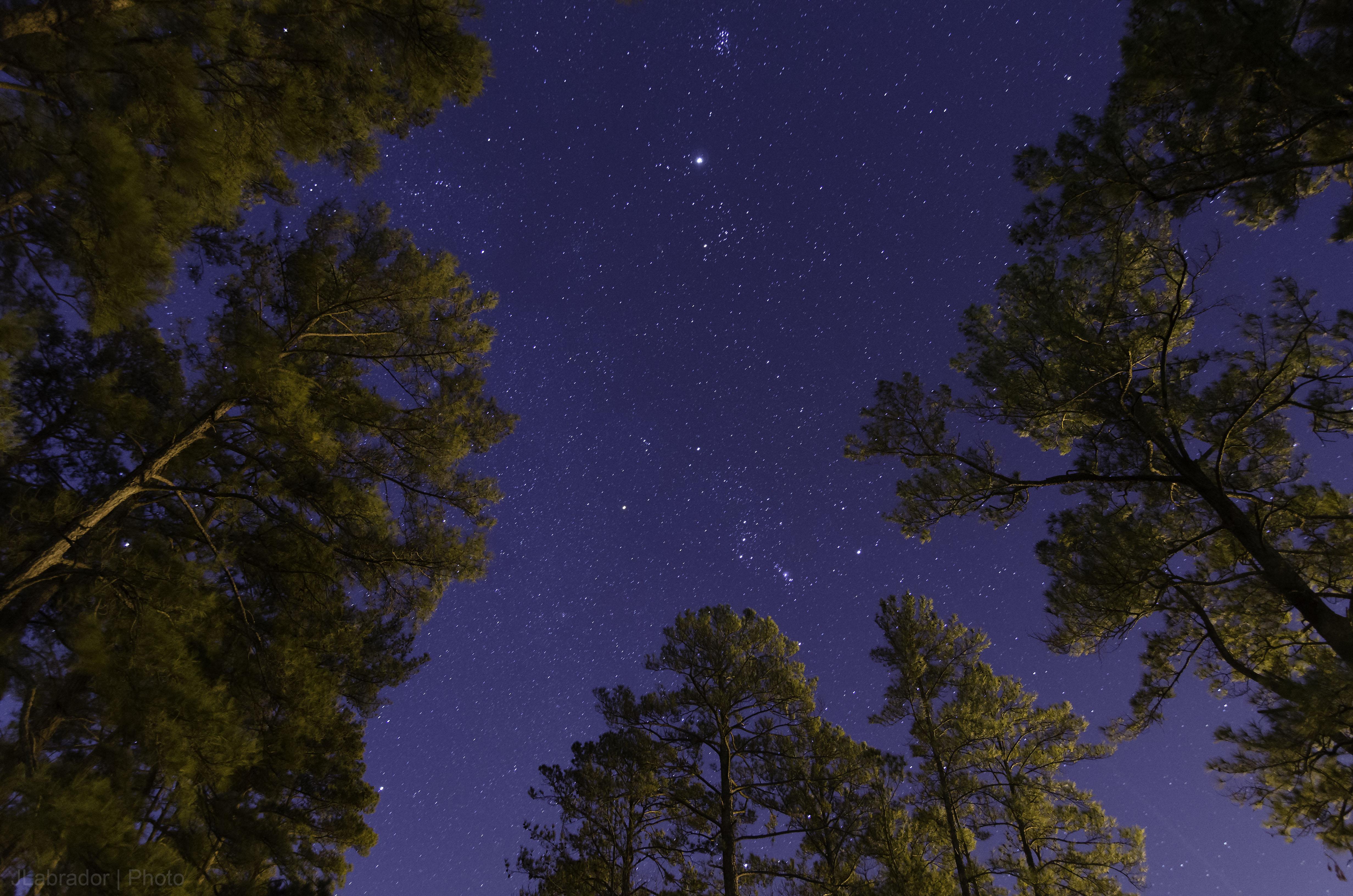 сегодняшний картинки ночное небо и деревья волки