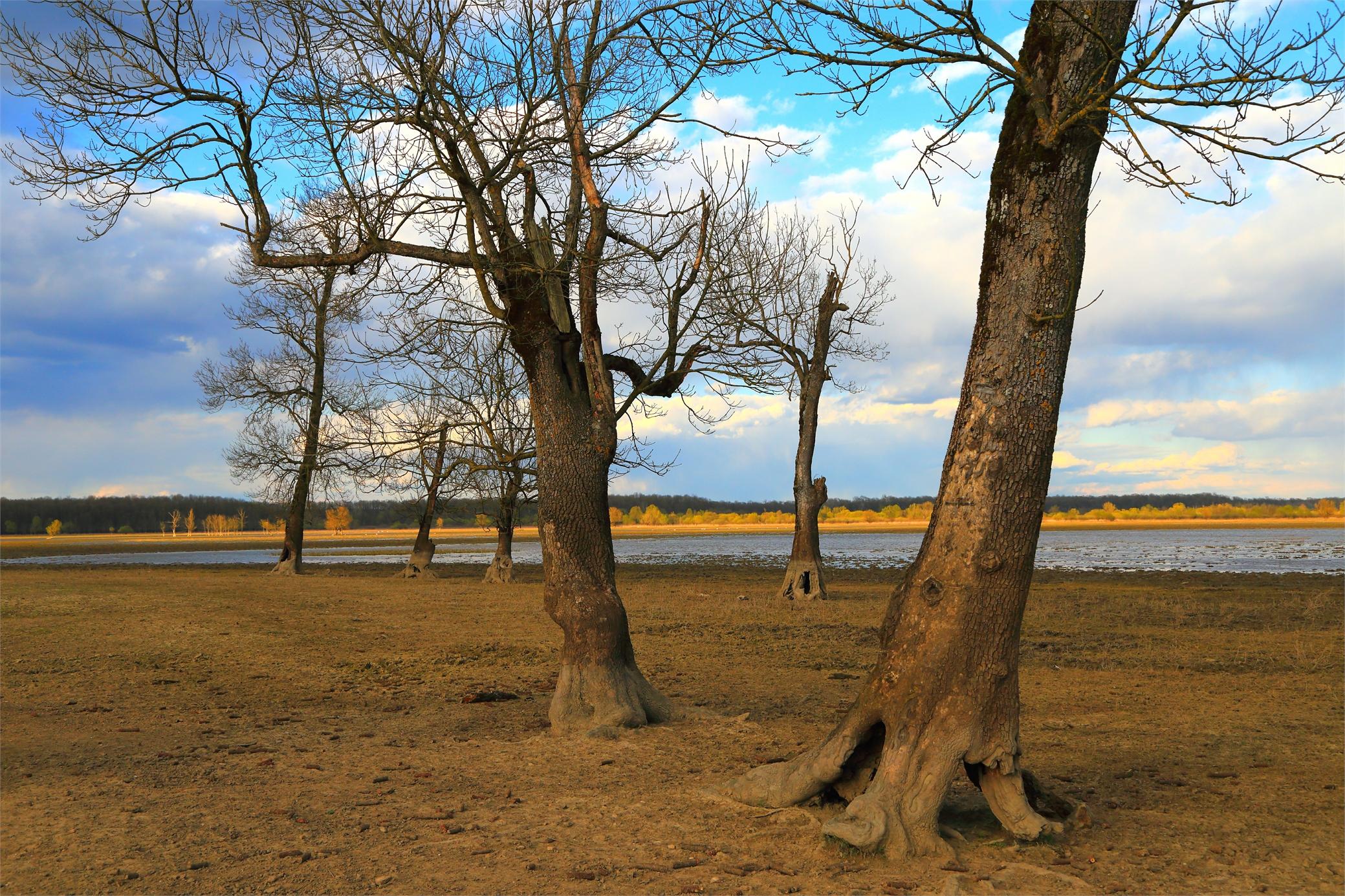Wallpaper : park, trees, nature, Croatia, birdwatching, Hrvatska