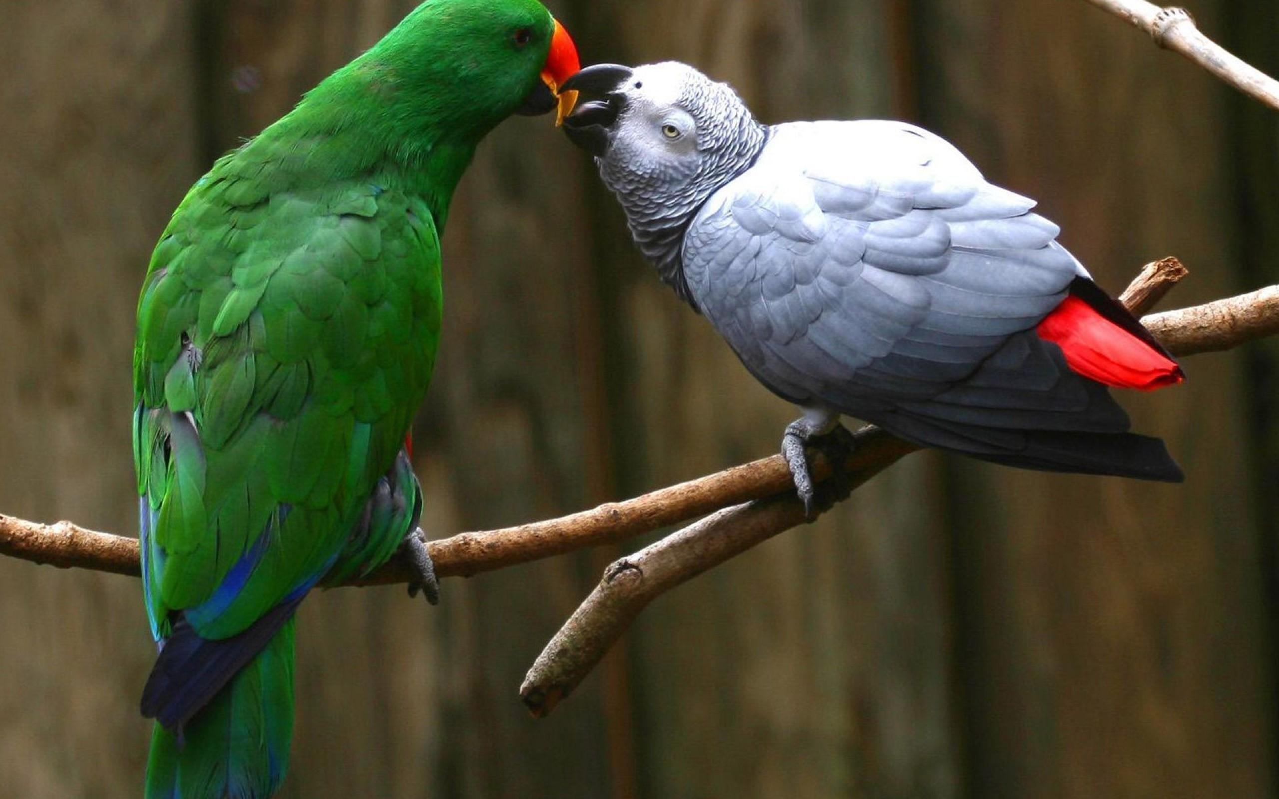 Птицы попугаи фото