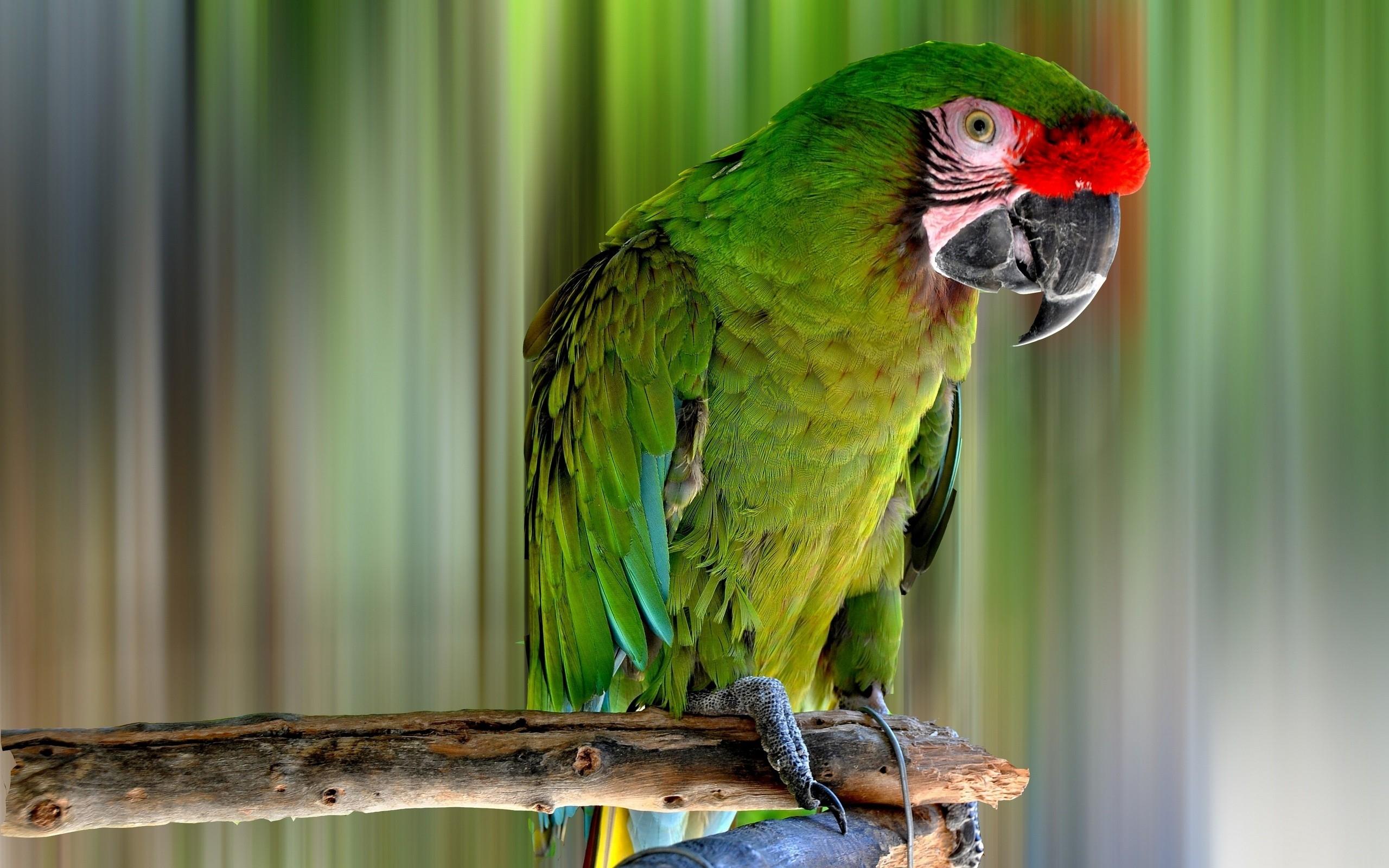 Лесные птицы фото с названиями и описанием